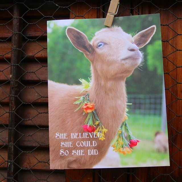 Everyone loves to get some happy mail and the art of sending letters and notes is lost. So we have added our greeting cards to our Flower Crowns and Tutus project/collection. Please consider supporting another crazy goat lover with your purchase of our calendars and cards! 🐐 Visit @flowercrownsandtutus and follow the link in bio!