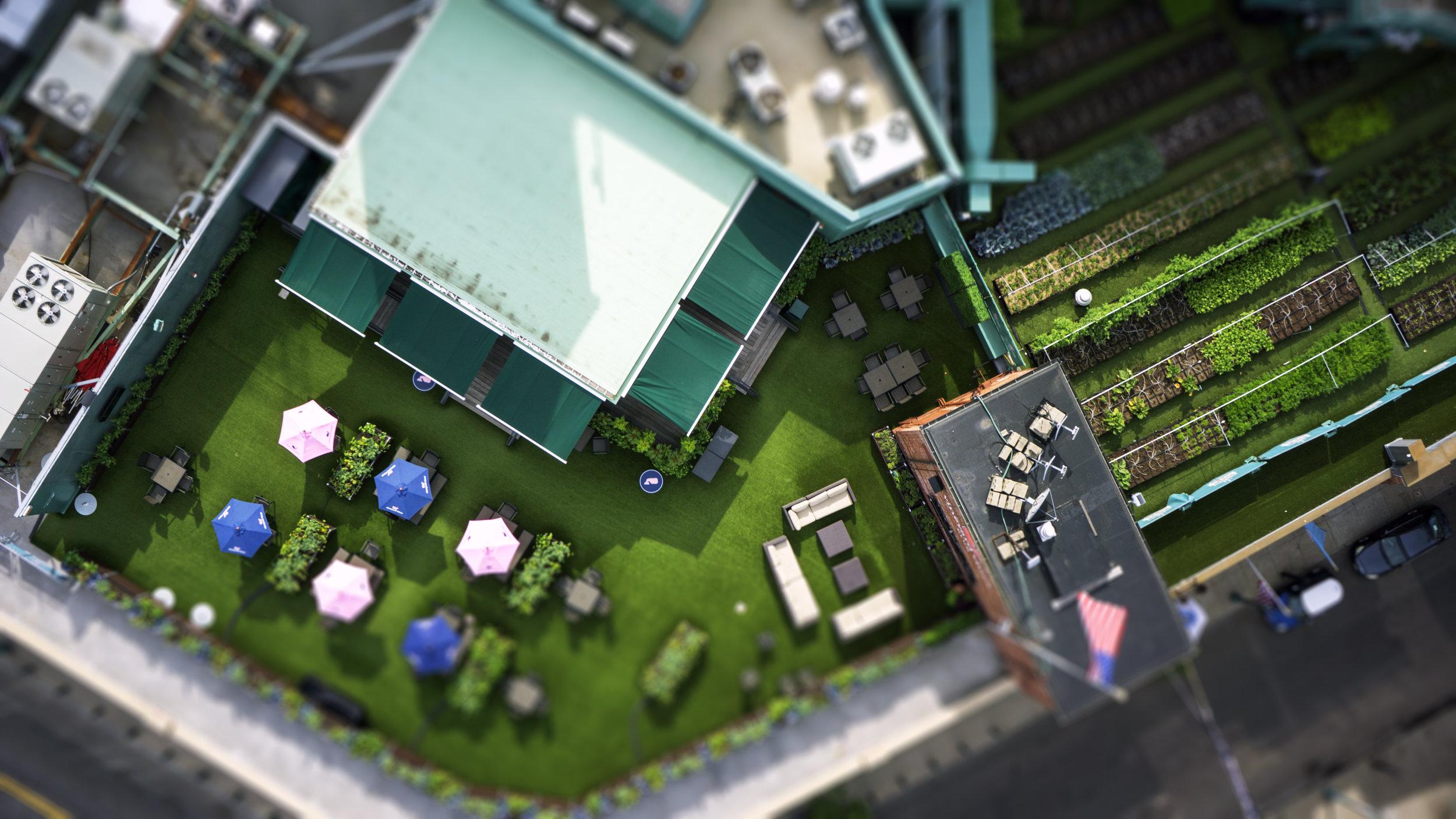 Fenway-Garden.jpg