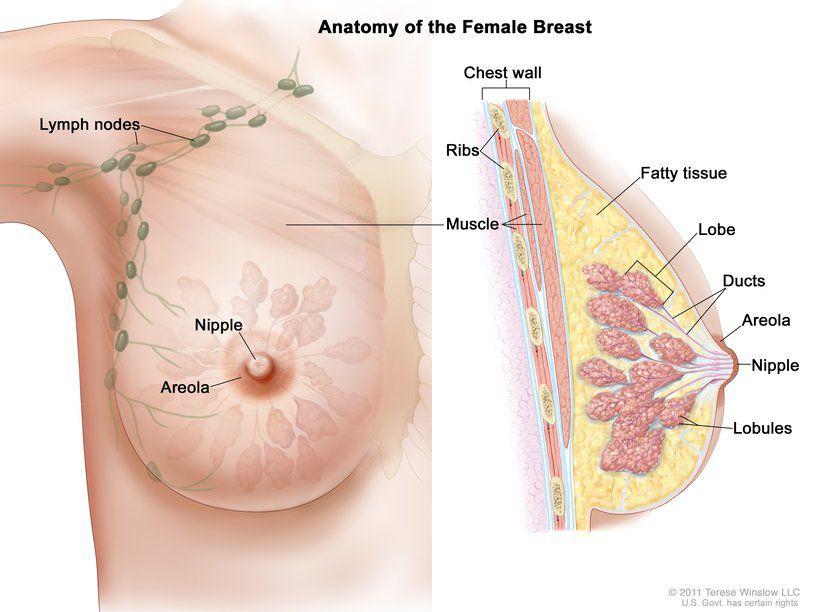 Breast .jpg