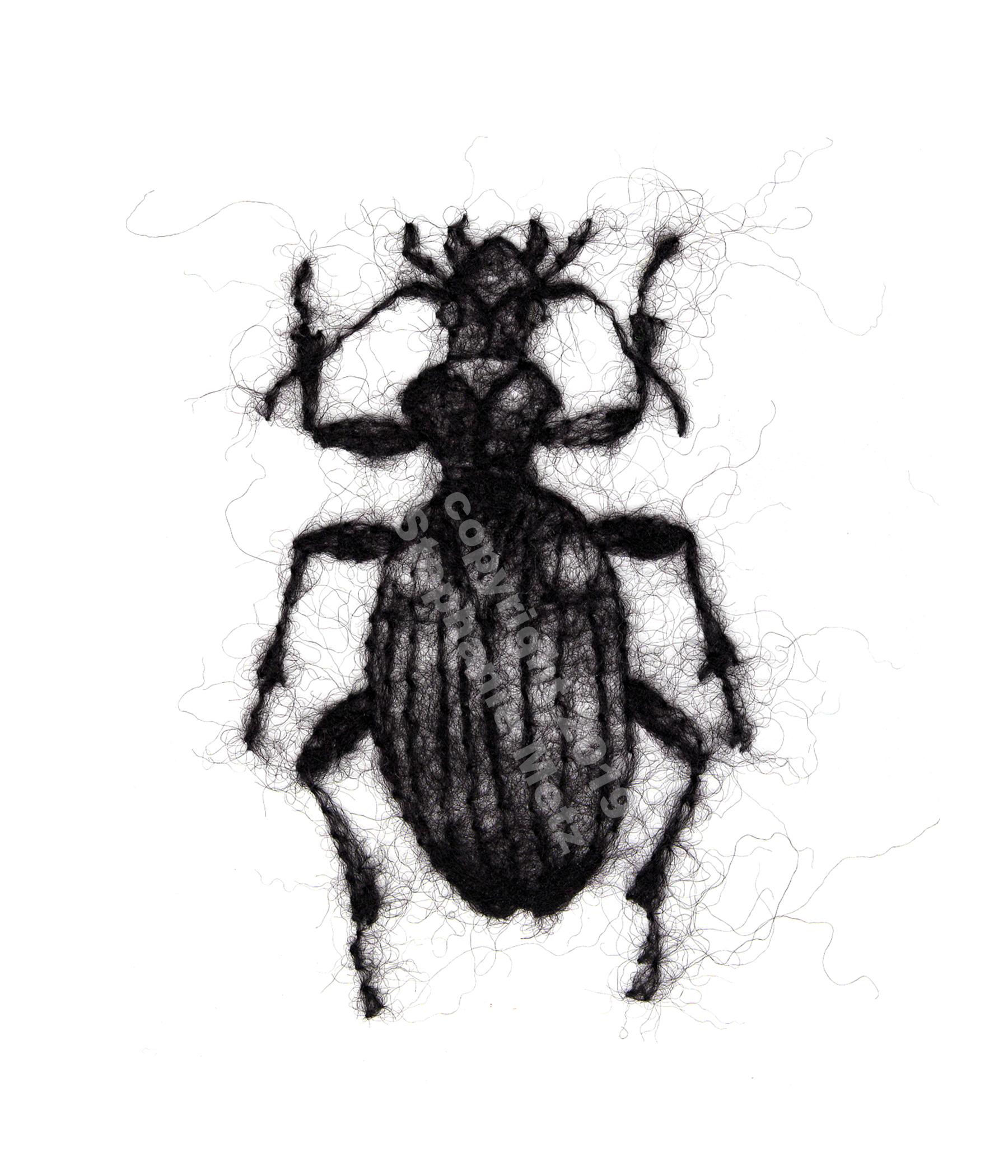 Beetle #7