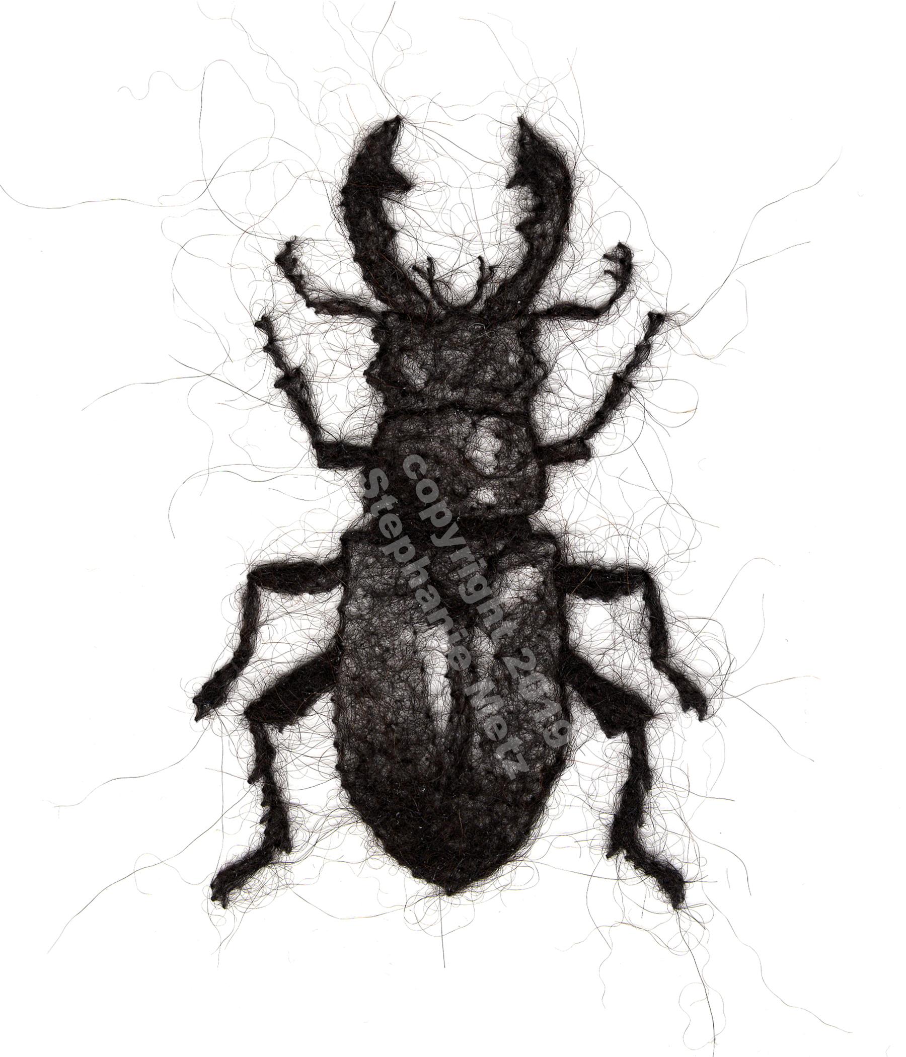 Beetle #8