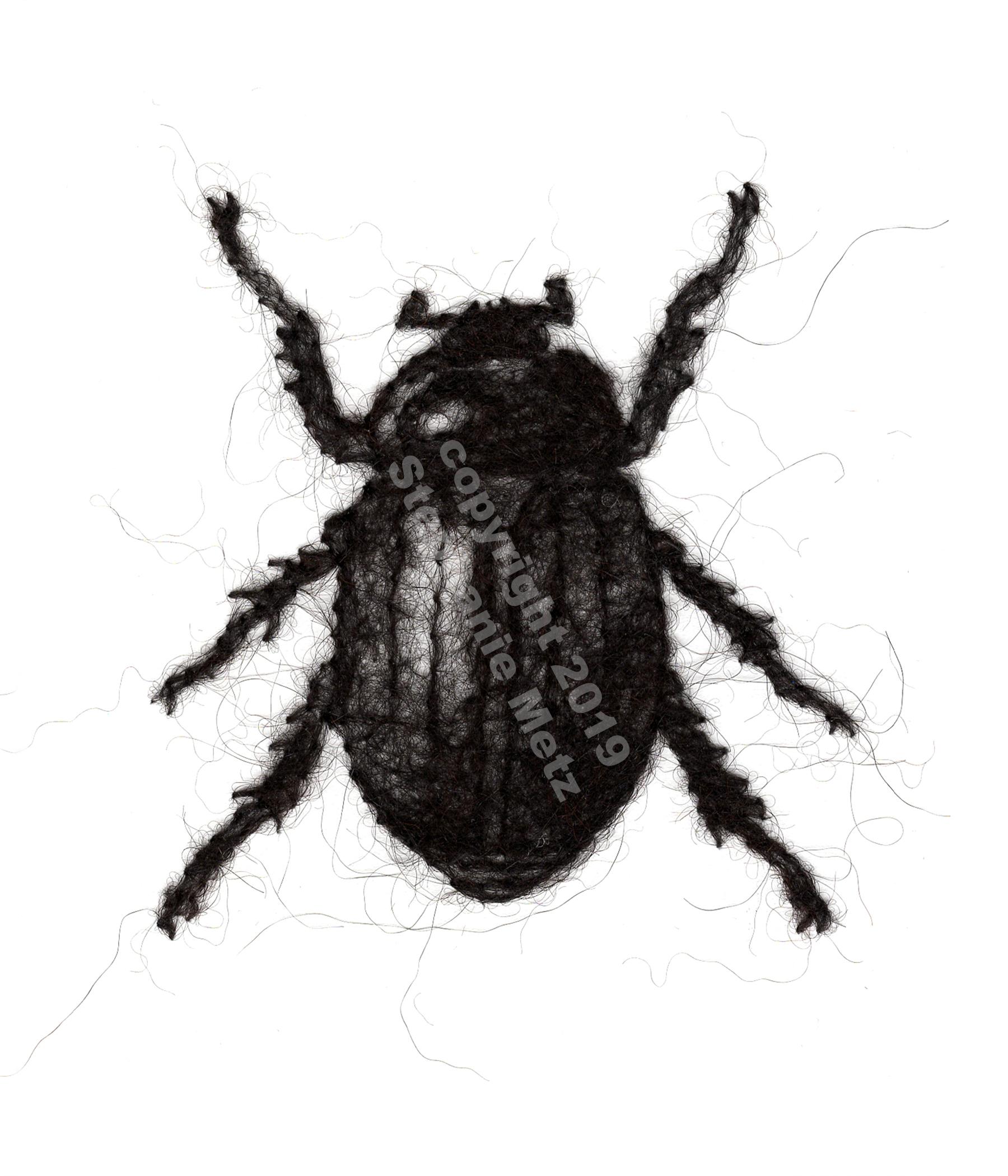 Beetle #9