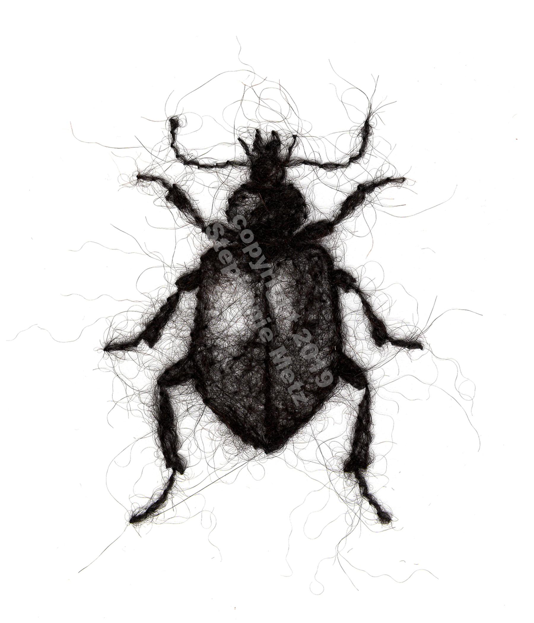 Beetle #10