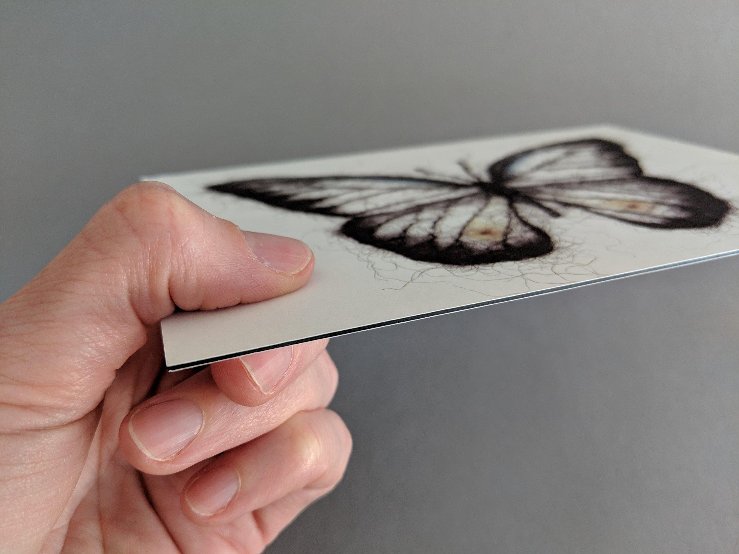 5 x 7 Butterfly Postcard Art Print Edge