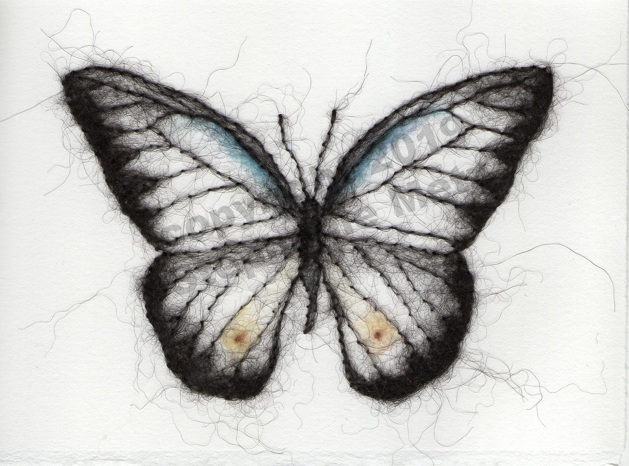 Chocolate Albatross Butterfly