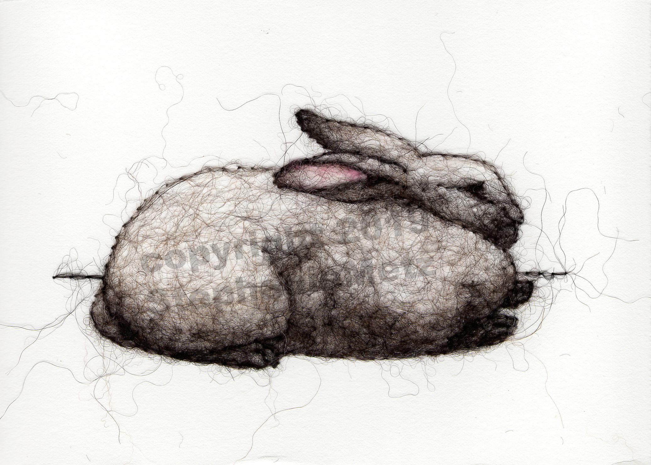 Grey Rex Rabbit