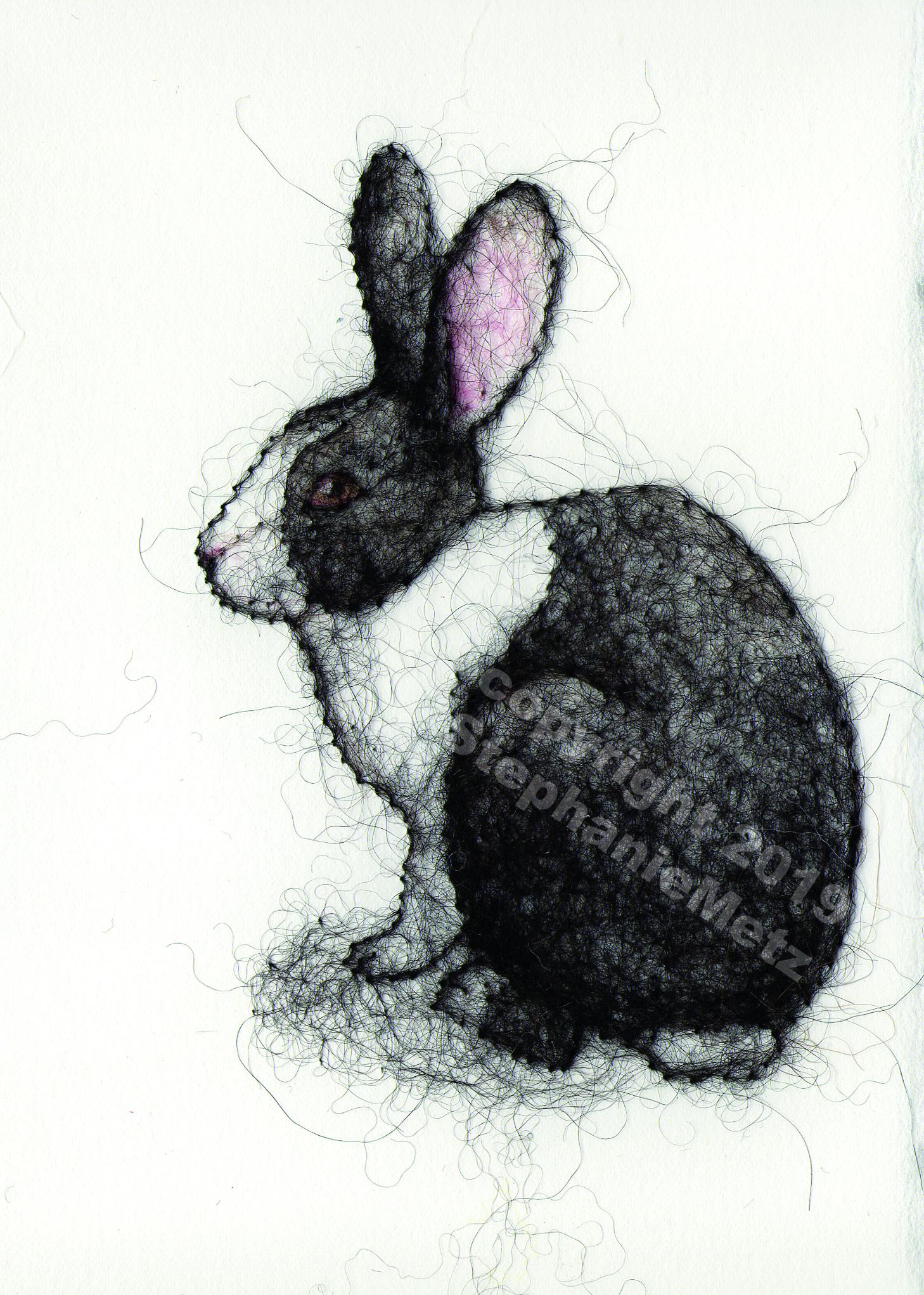 Domestic Dutch Rabbit