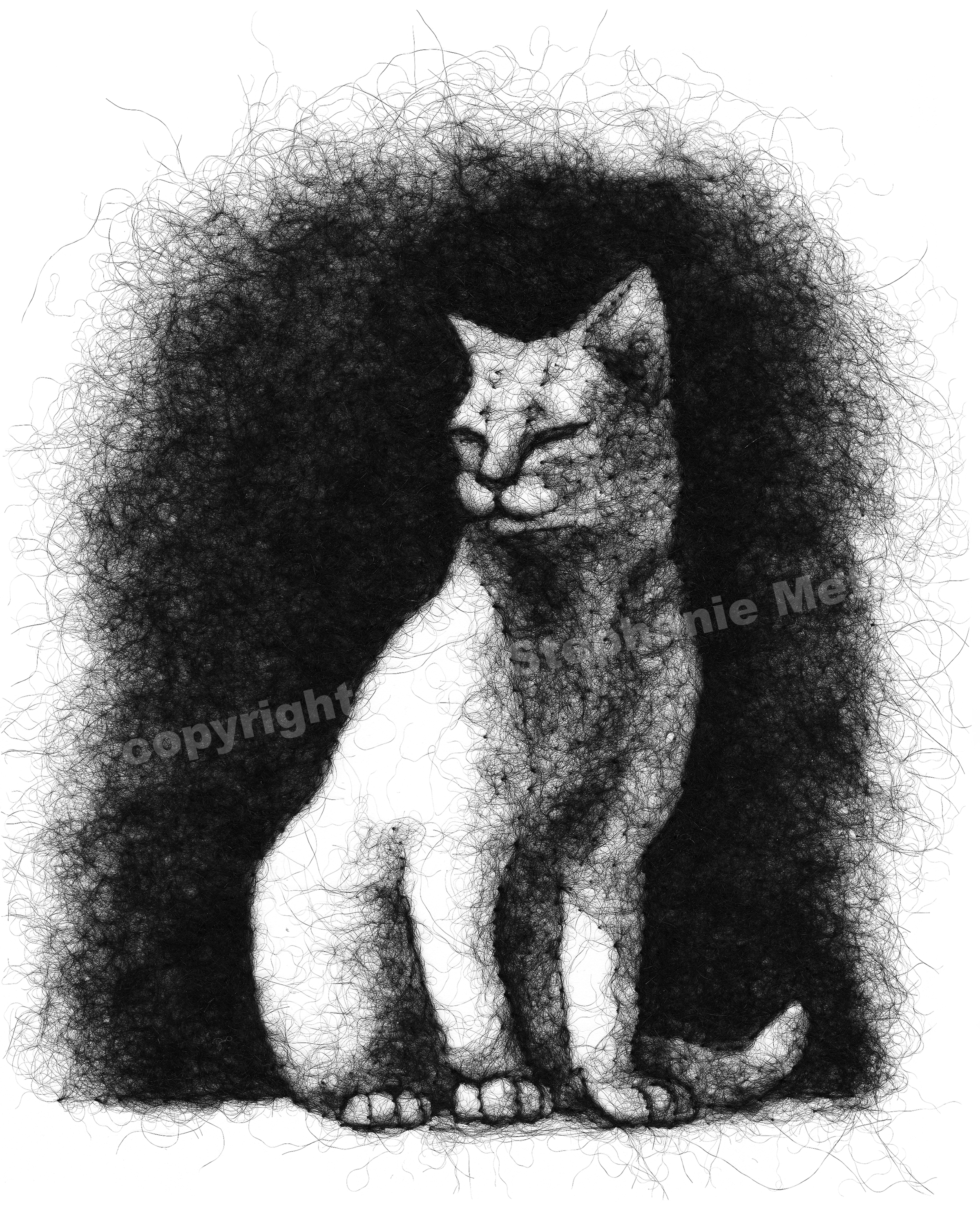 Cat In the Sun Wool Drawing Archival Print ($75 Pledge)