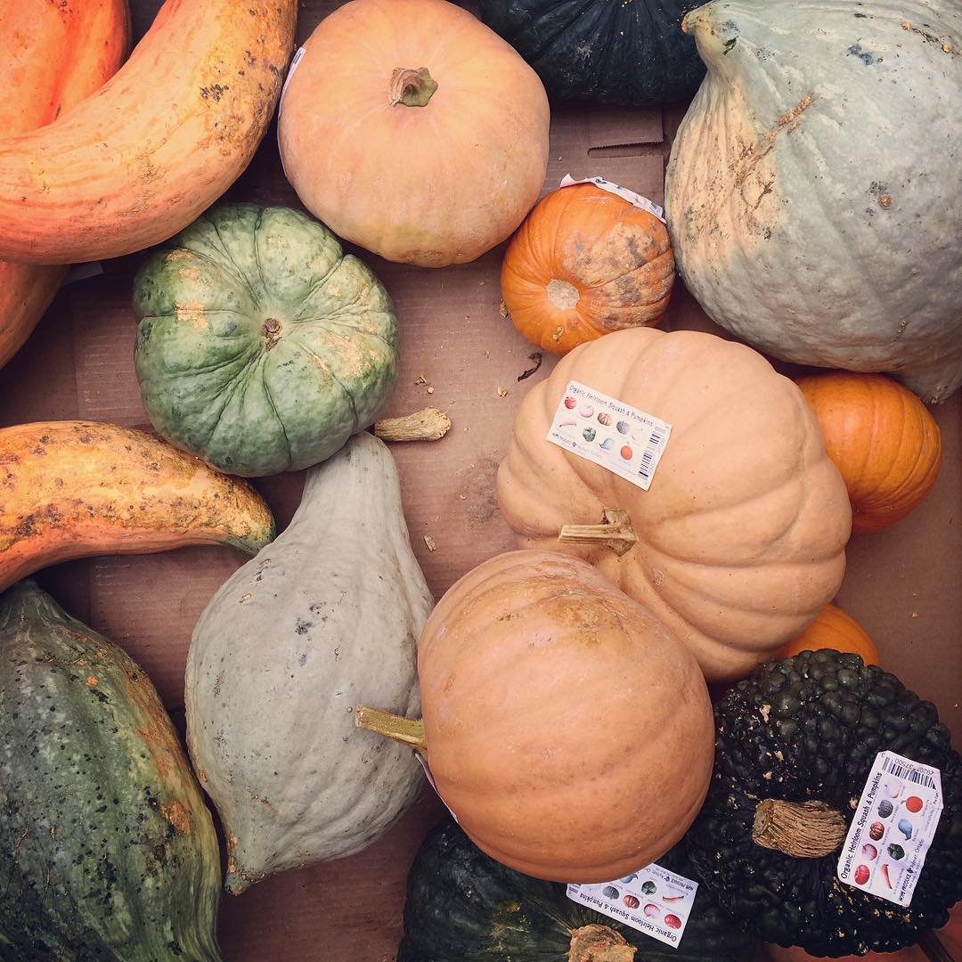 Gourds at The Big Carrot