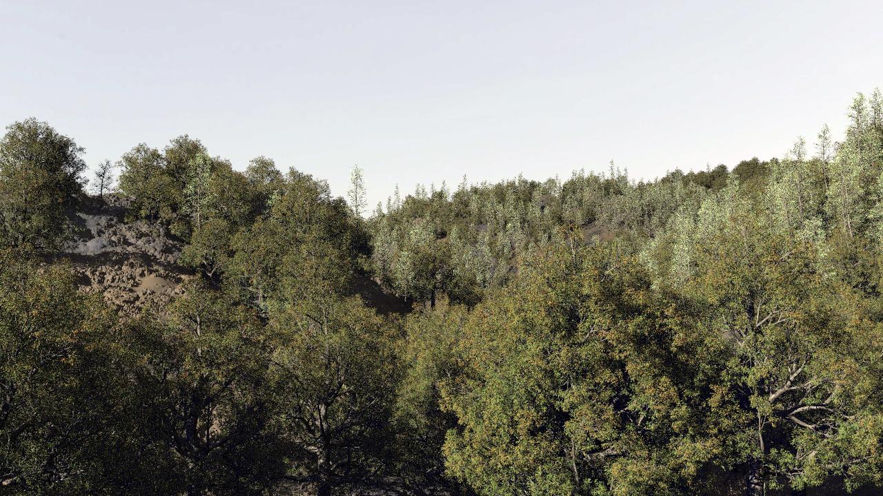 Houdini Procedural Forest