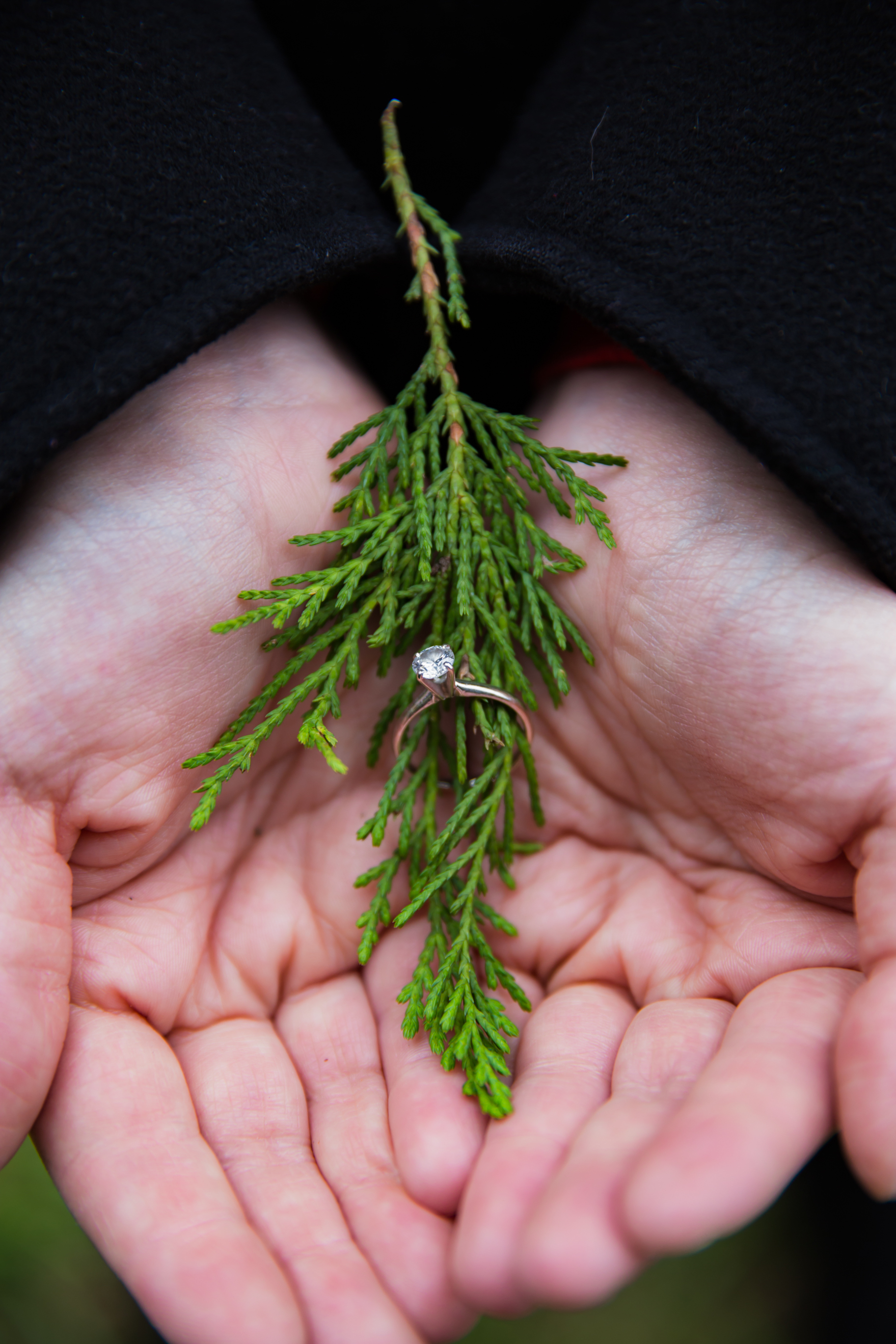 Christmas Tree Farm, Rand Bryan House , Engagement Ring, Engagement Photography