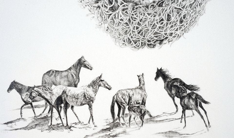 Banksia Mustangs