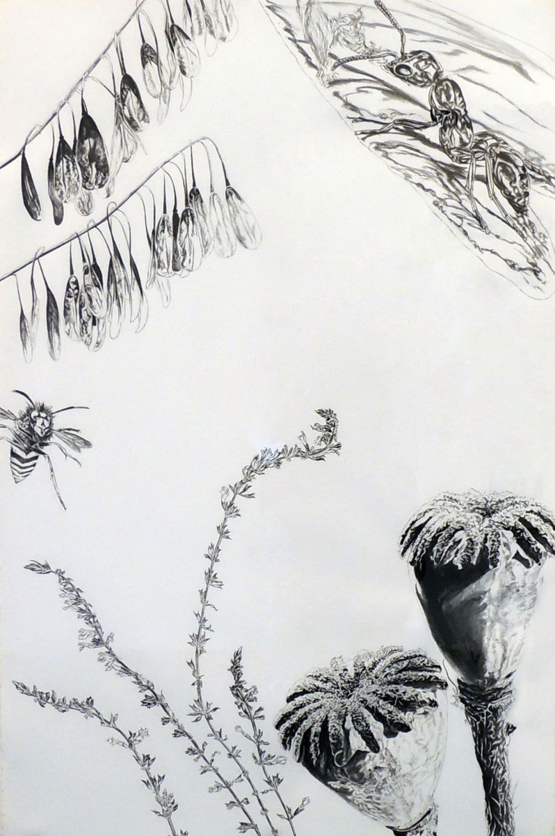 Bee, Ant, Seed Pods