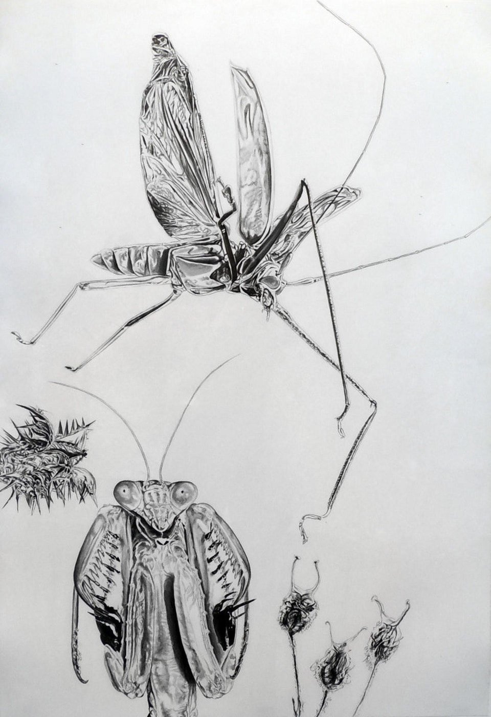 Mantis and Friend