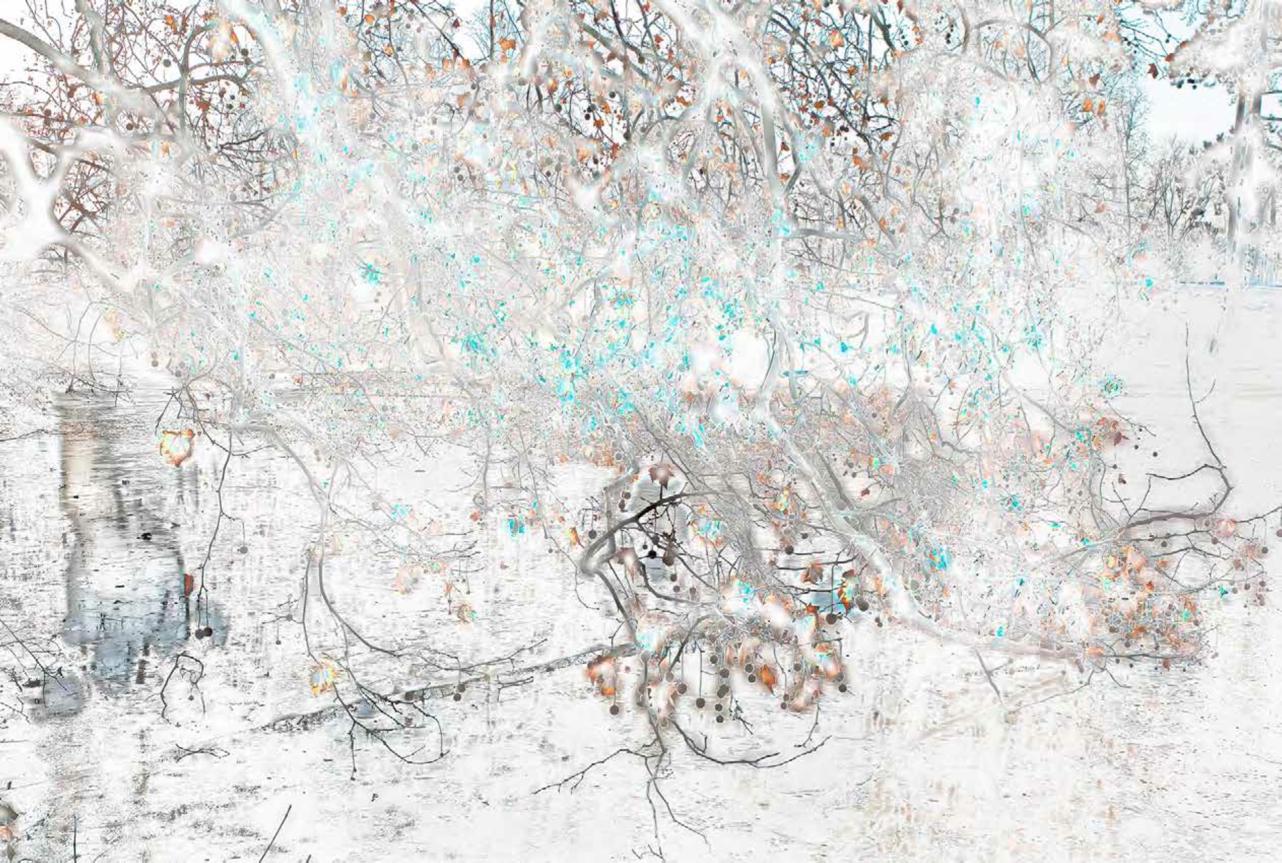 Cuprous Frozen Bois de Boulogne I