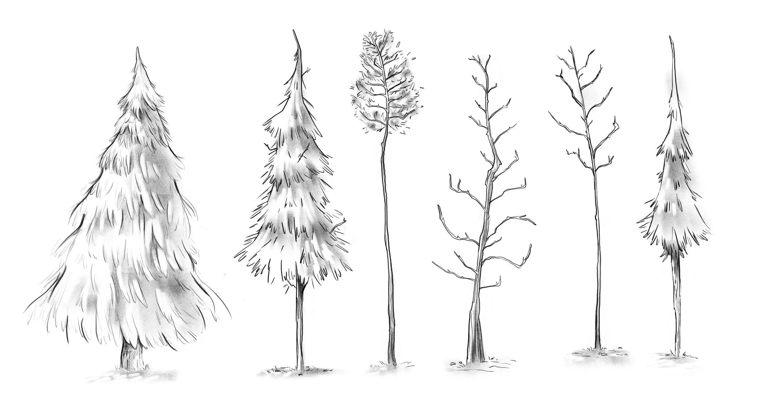 TREES EXPLORATION