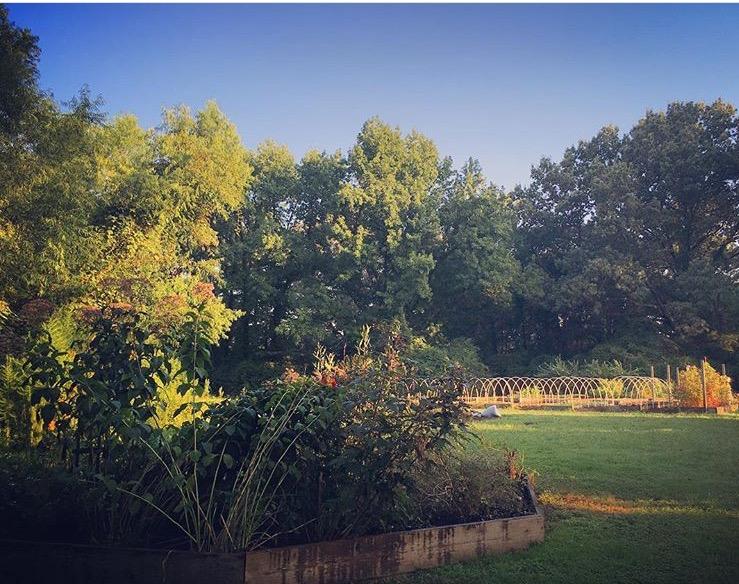 Hutchison pollinator garden