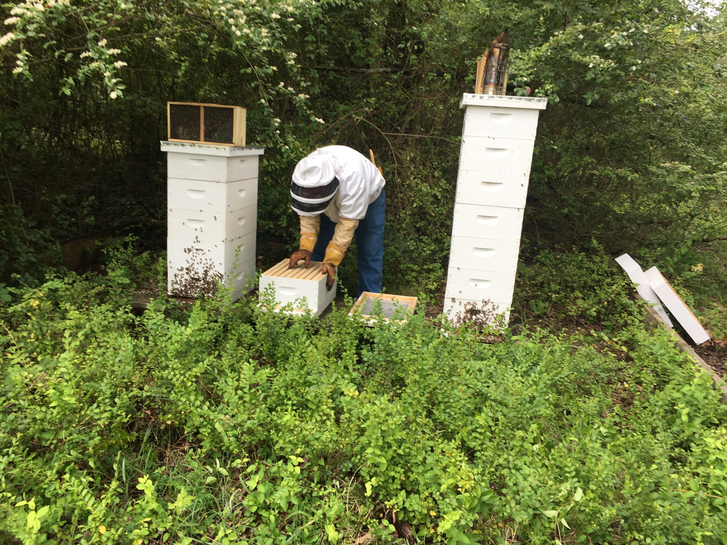 Richard Underhill, Master Beekeeper, and the Hutchison Apiary
