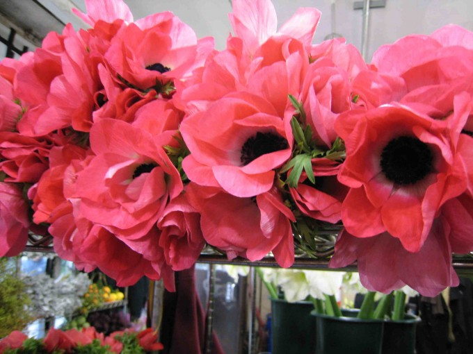 Pink Anemones via  Exquisite Designs