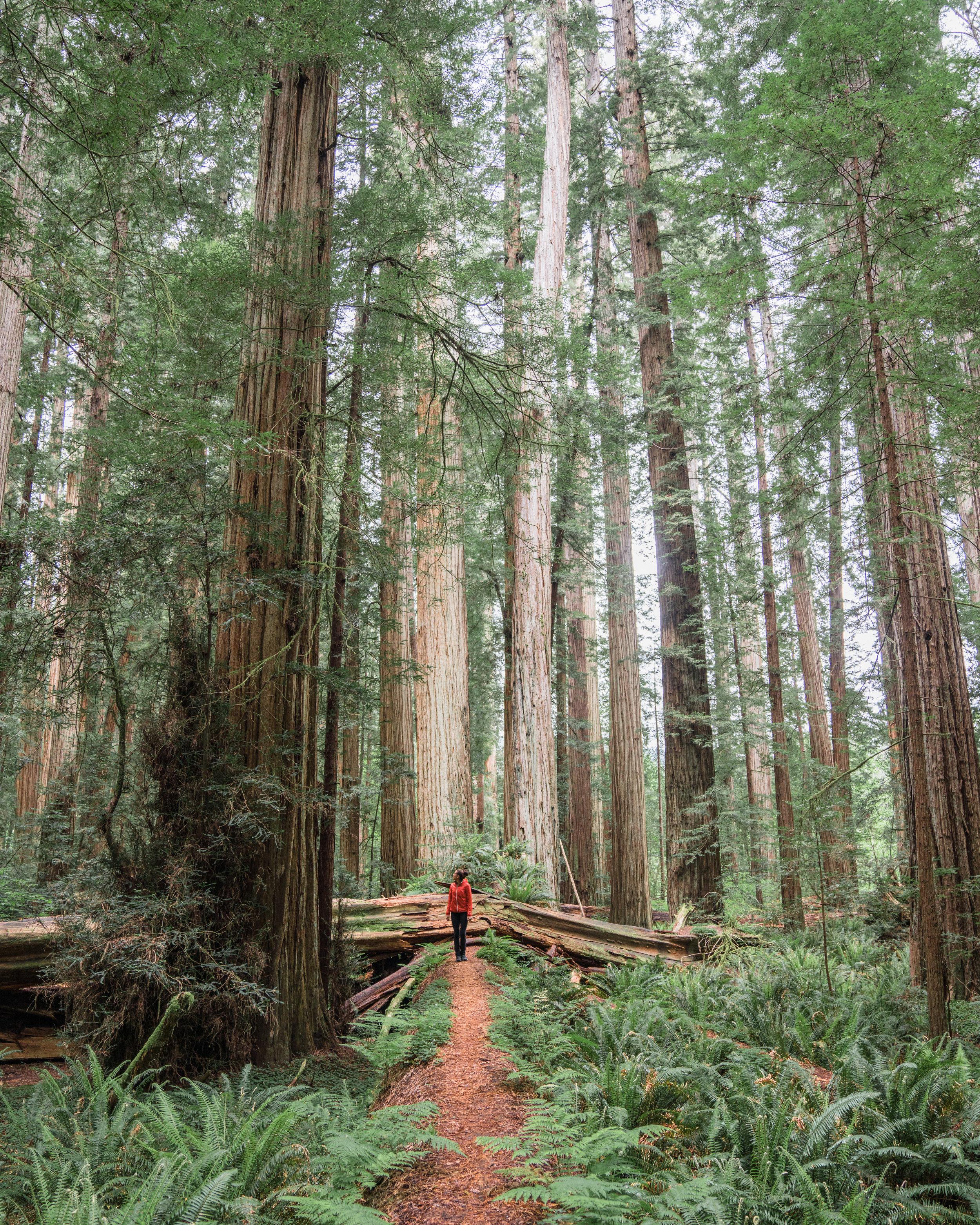 BPMAG-Redwoods-2.jpg