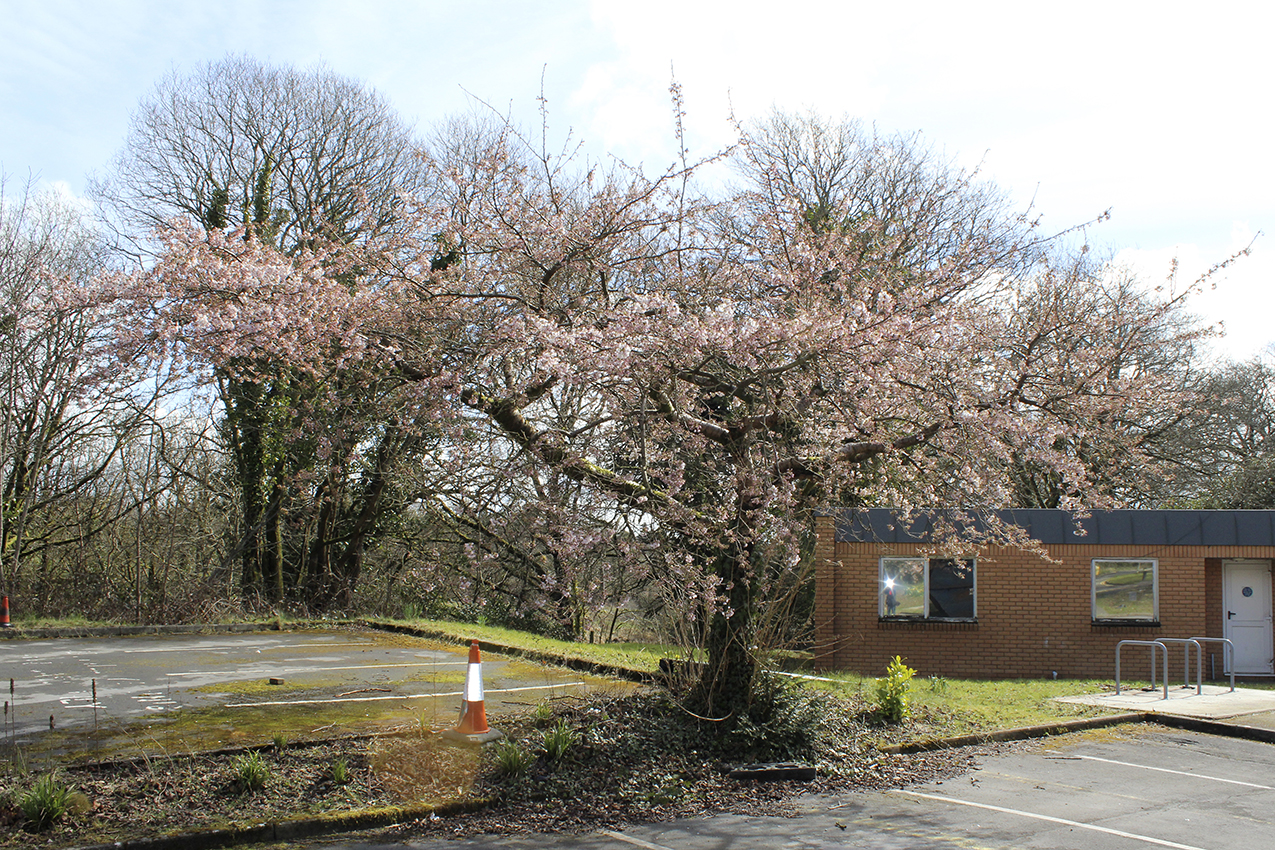 5. Penllergare_Tree_Spring.jpg