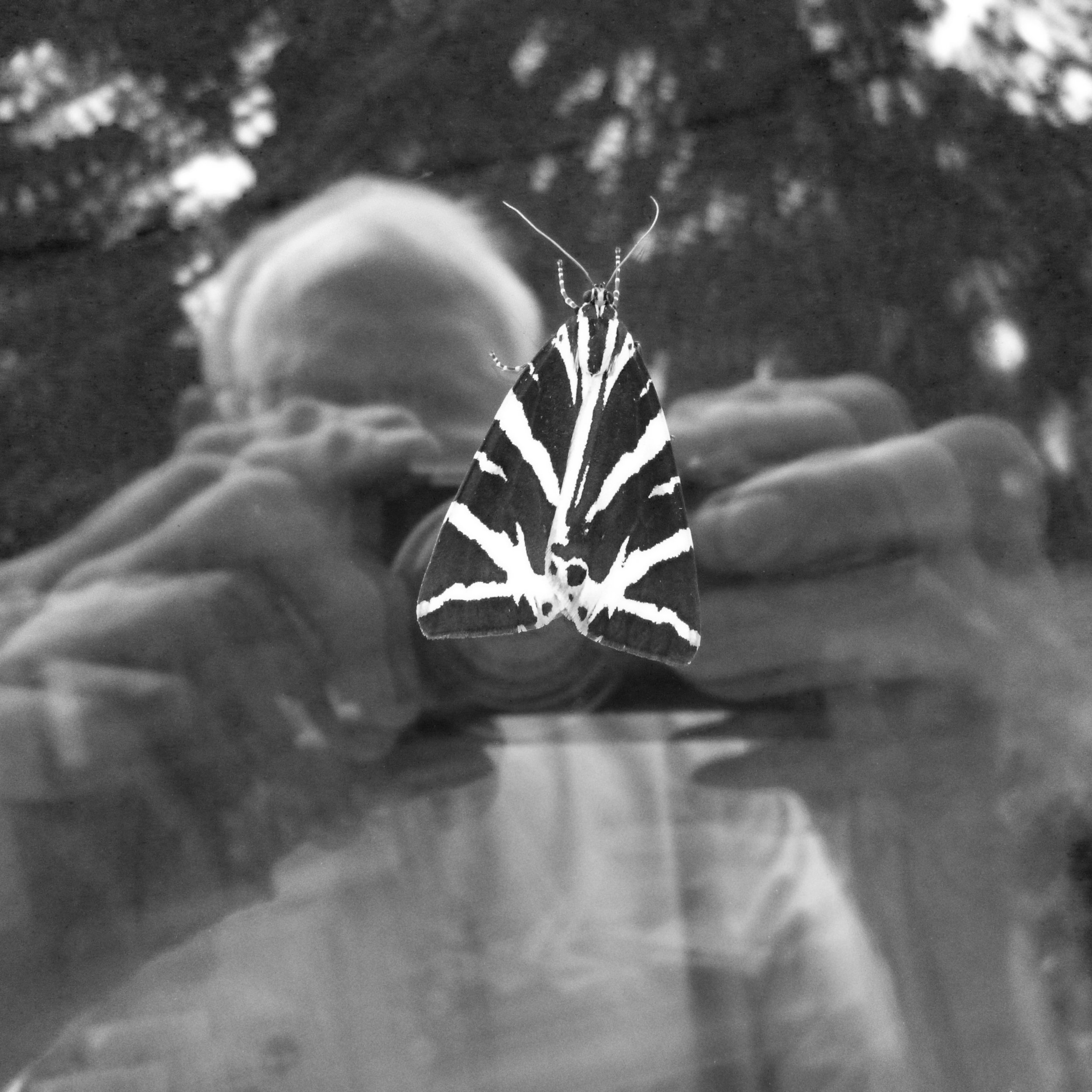 Jersey Tiger Settled on Window, 2012/ The Death of a Beautiful Subject, 2015 (24)