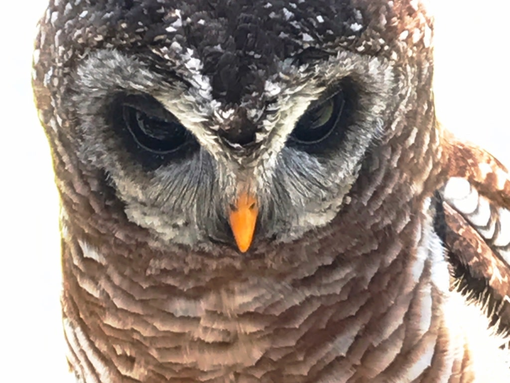 Close up of the owl