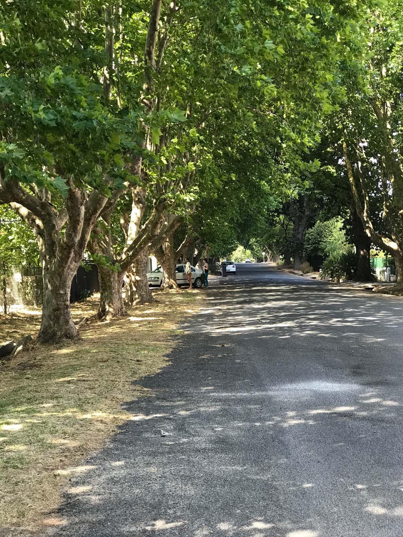 tree-lined street