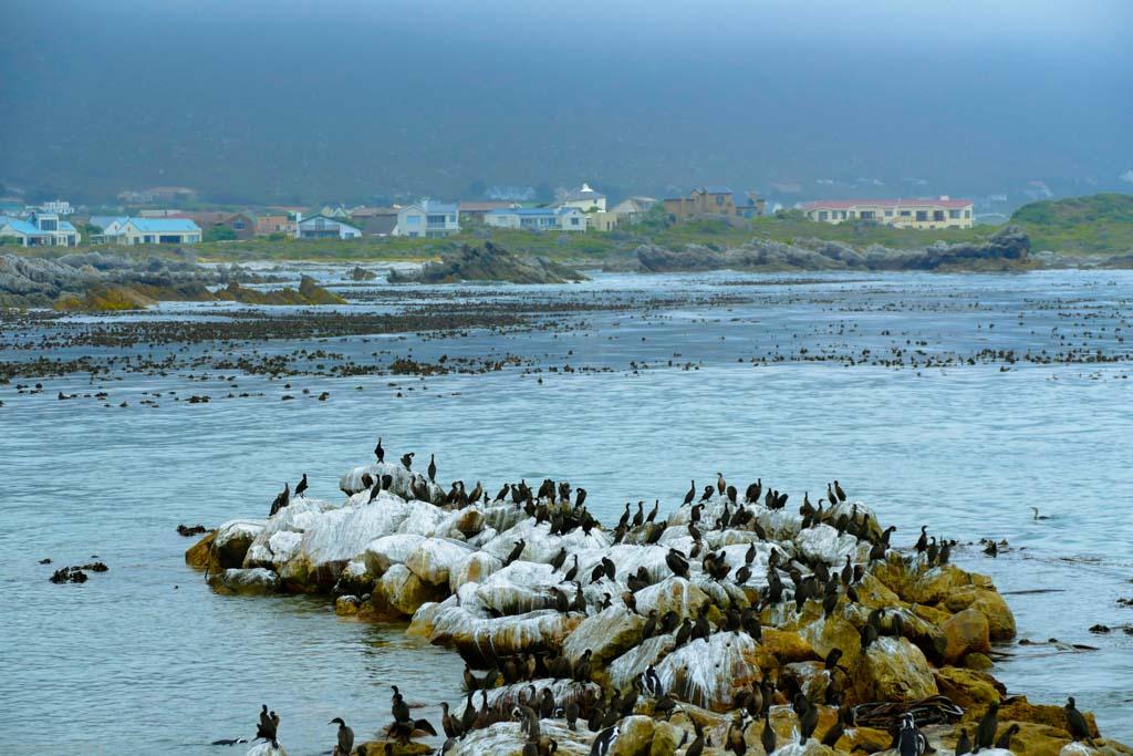 penguins-2.jpg