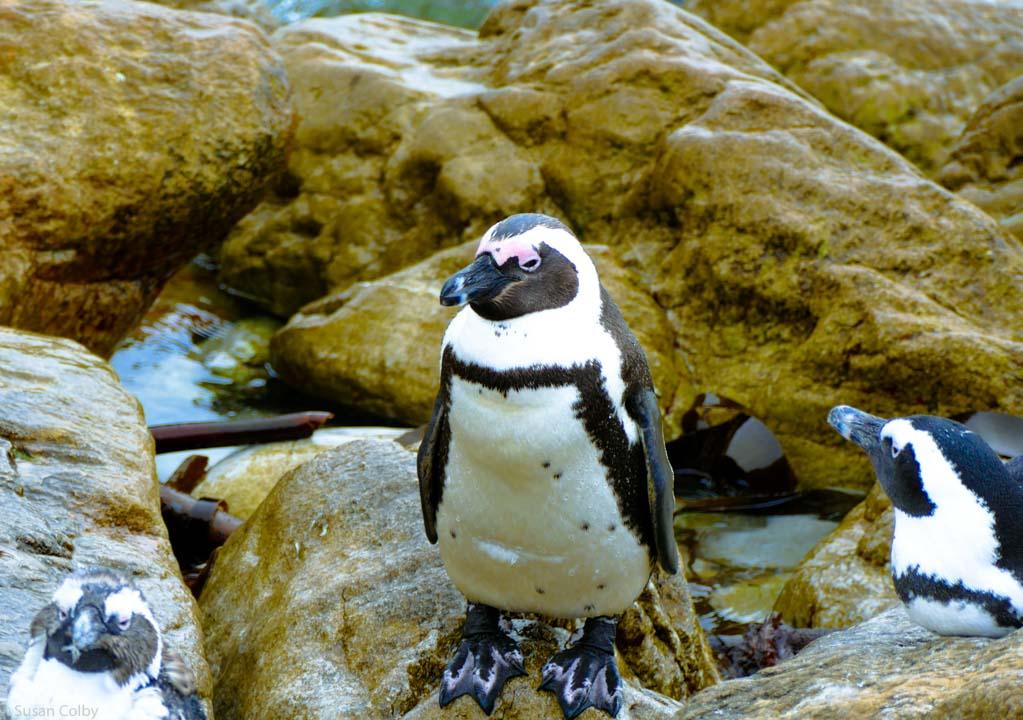 penguins-4.jpg