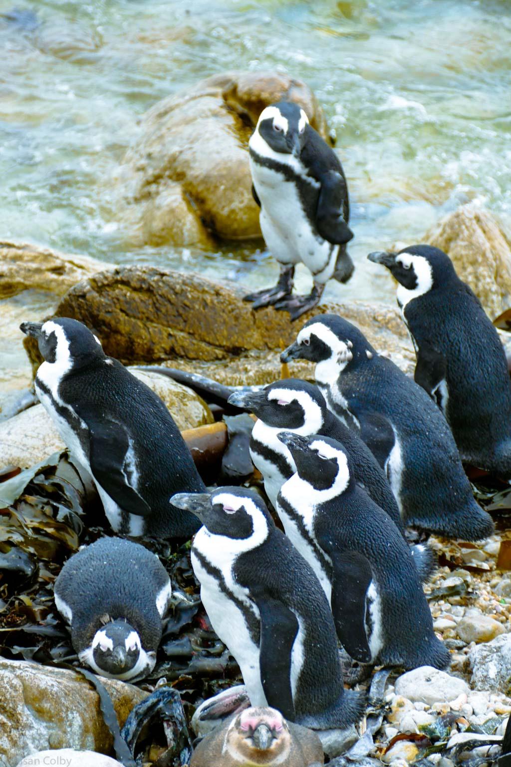 penguins-5.jpg