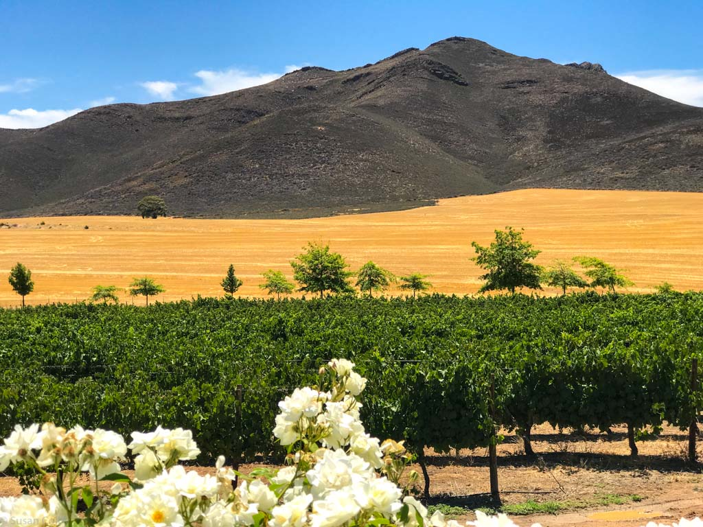 Contrast at Stettyn Cellars