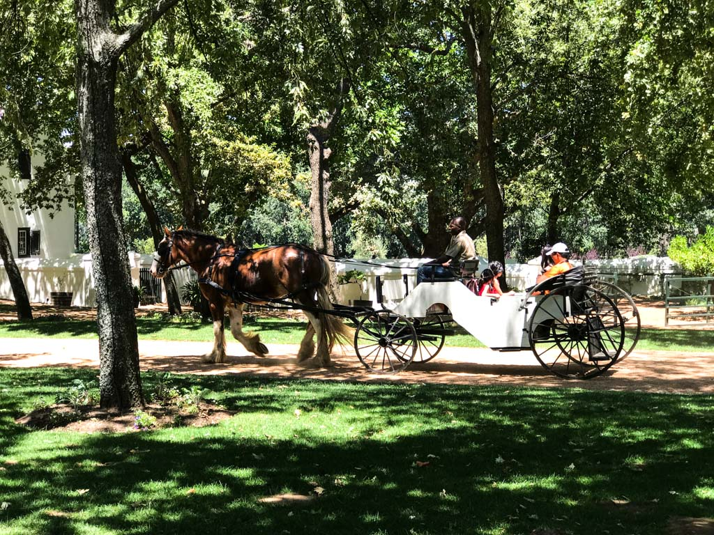 Horse-drawn carriage at Boschendal