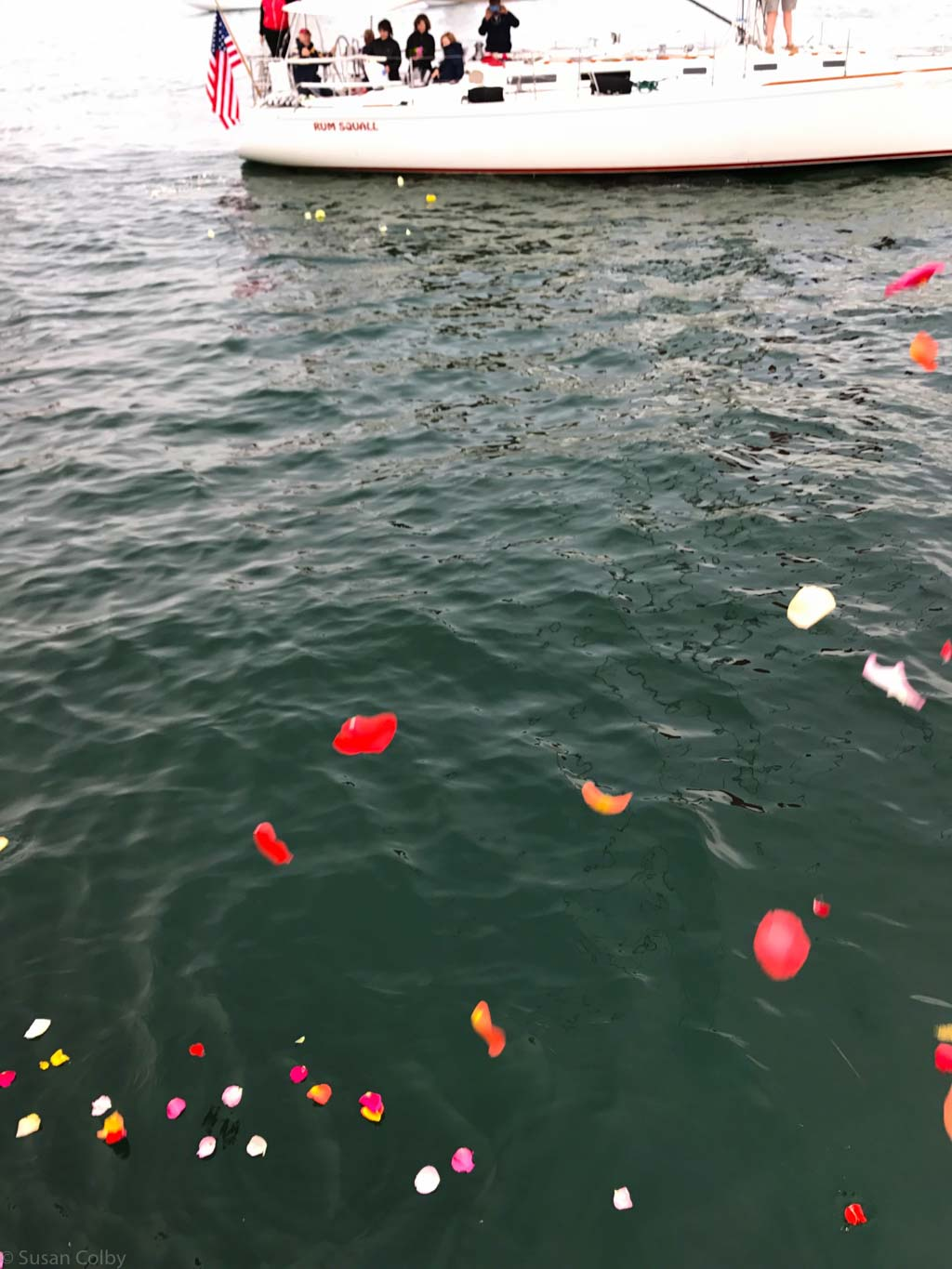 Rose petals on the water