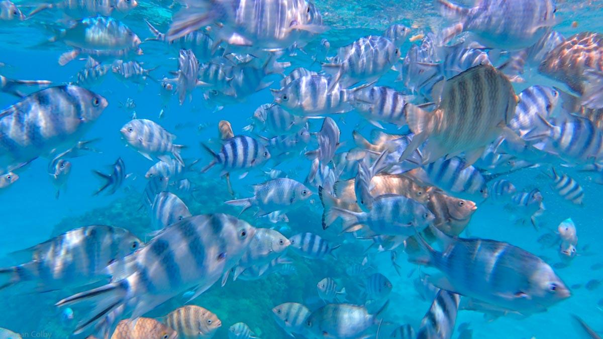 Hundreds of fish swim in the Aquarium in Bora Bora Lagoon