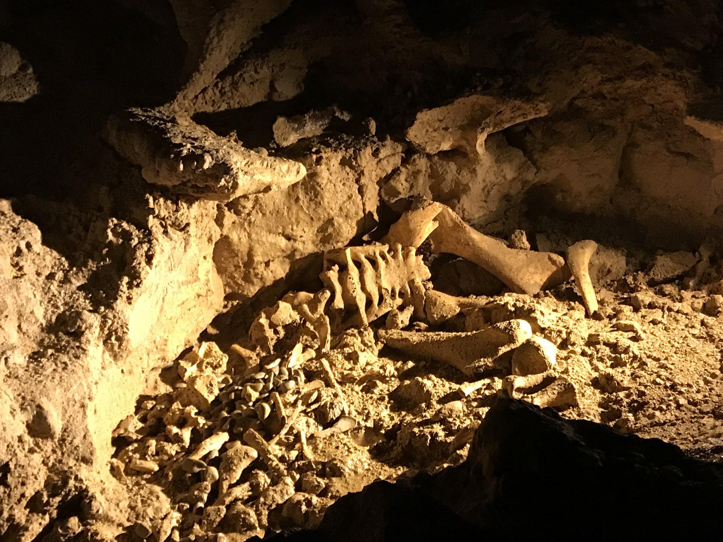 Kiwi skeleton in the glowworm cave