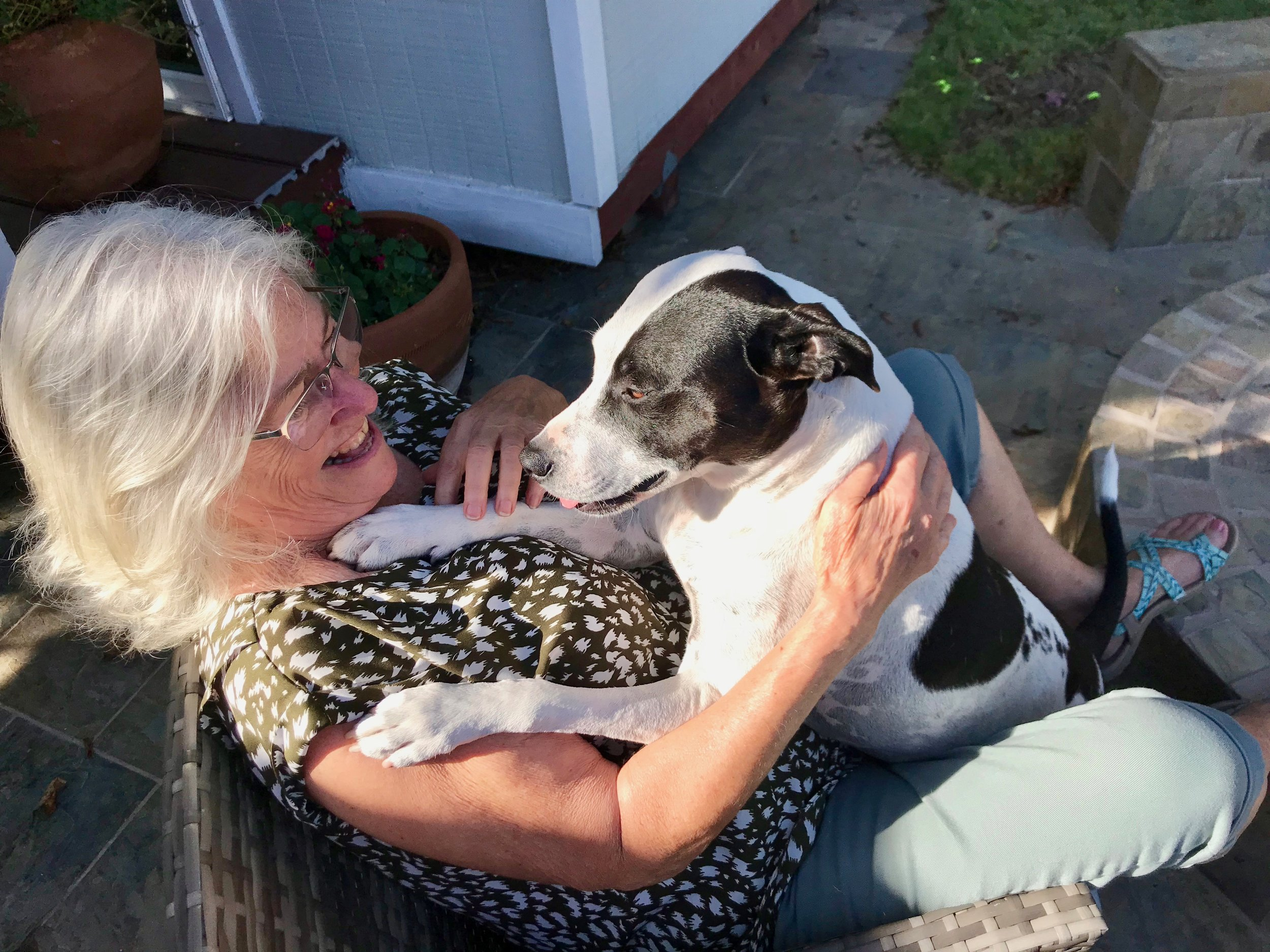 Sweet Delilah is a Staffie mix and has the sweet temperament of the breed