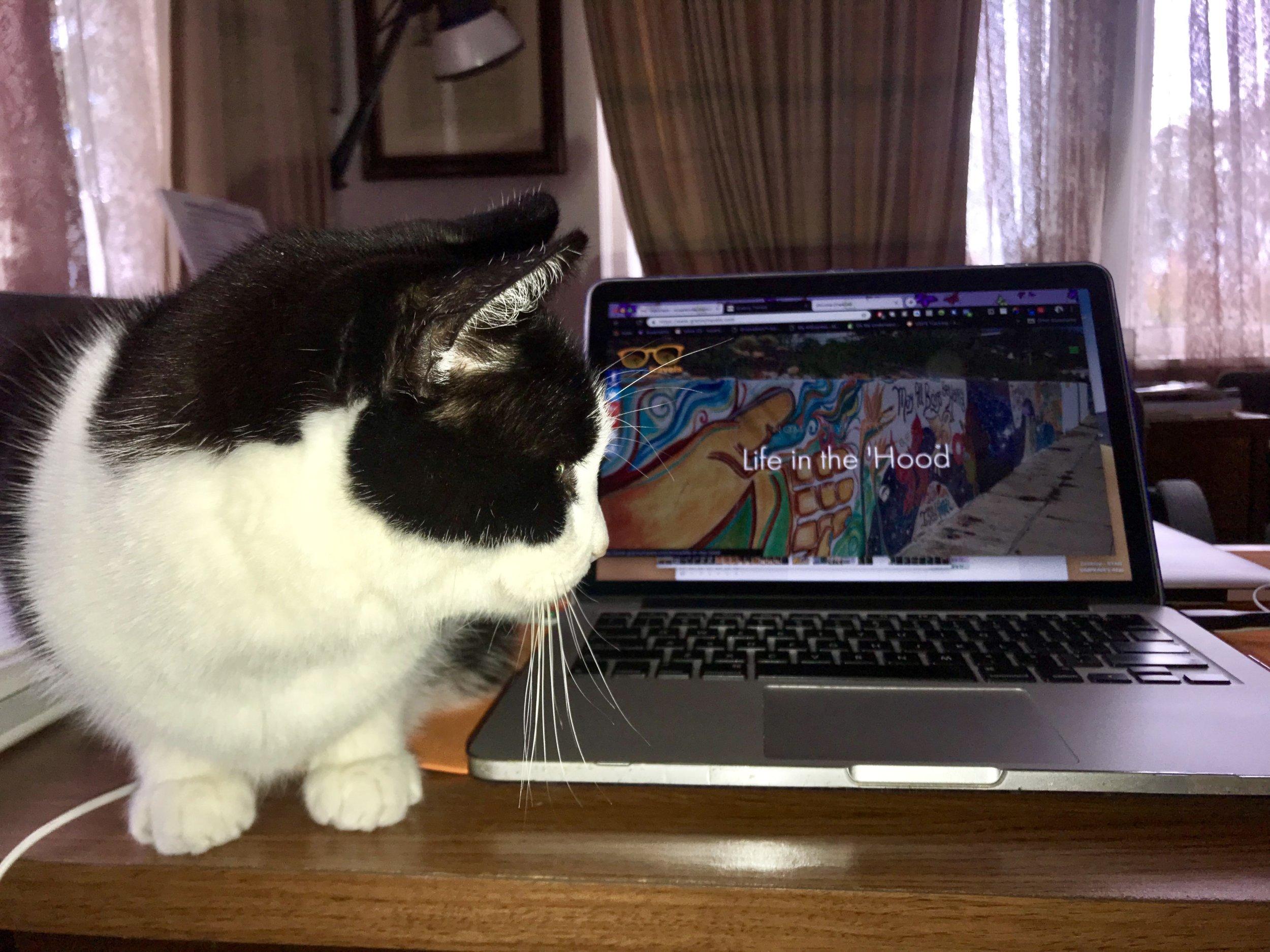Moonie helping me
