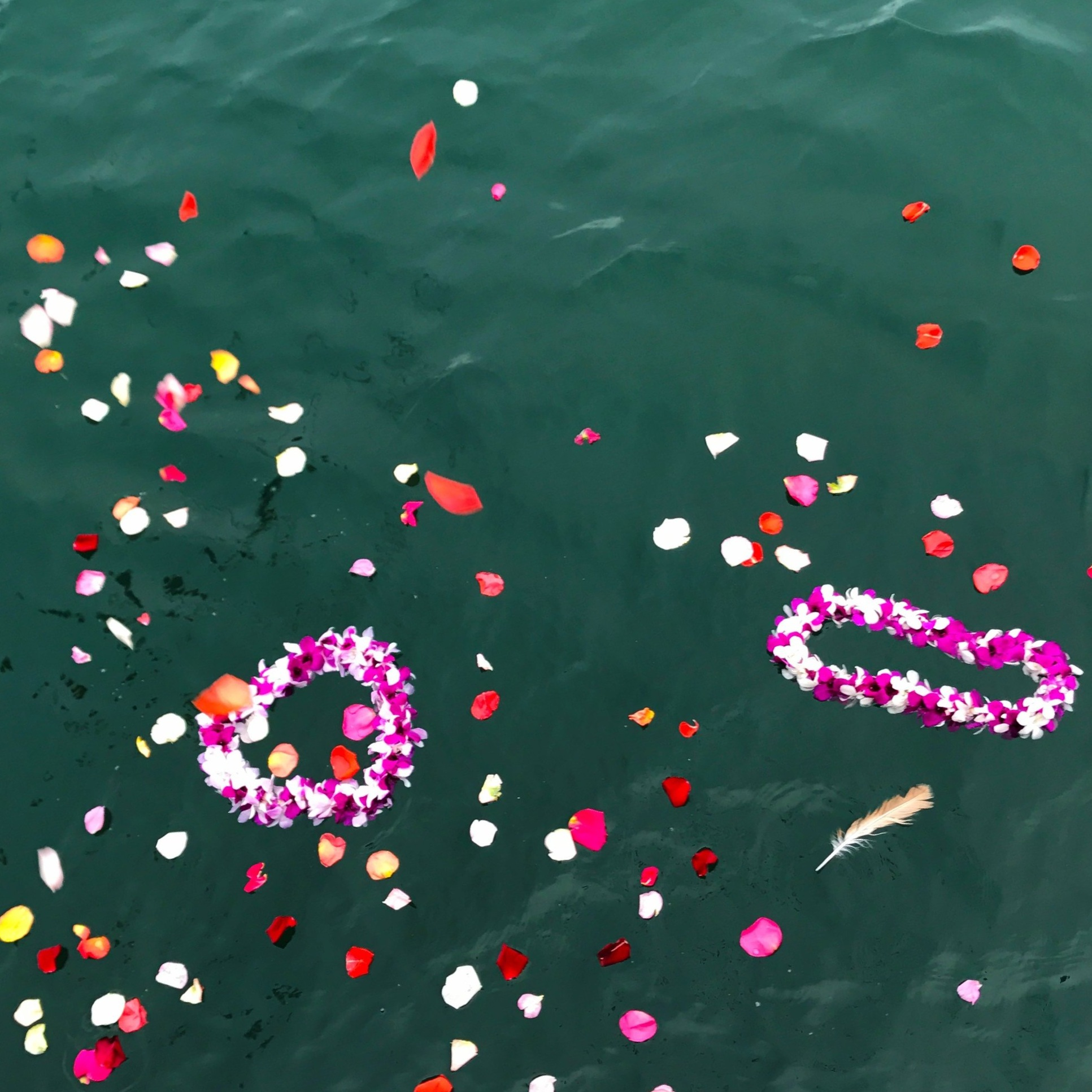 Petals on the water at Bobby's memorial
