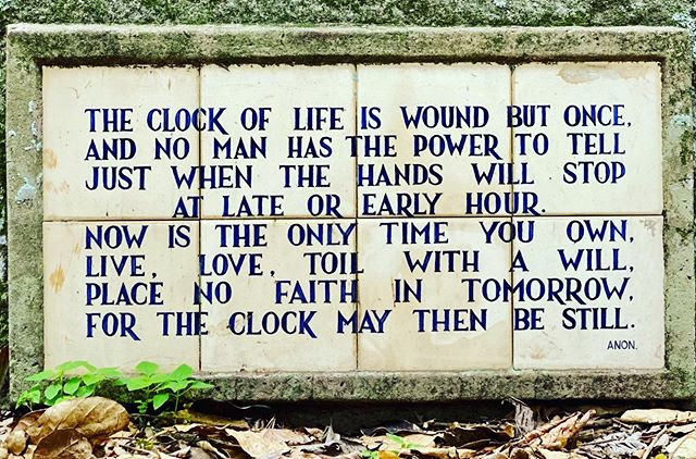 Found this at the Botanic Gardens #botanicgardens #durbanbotanicalgardens #clockoflife #justdoit #travelblogger