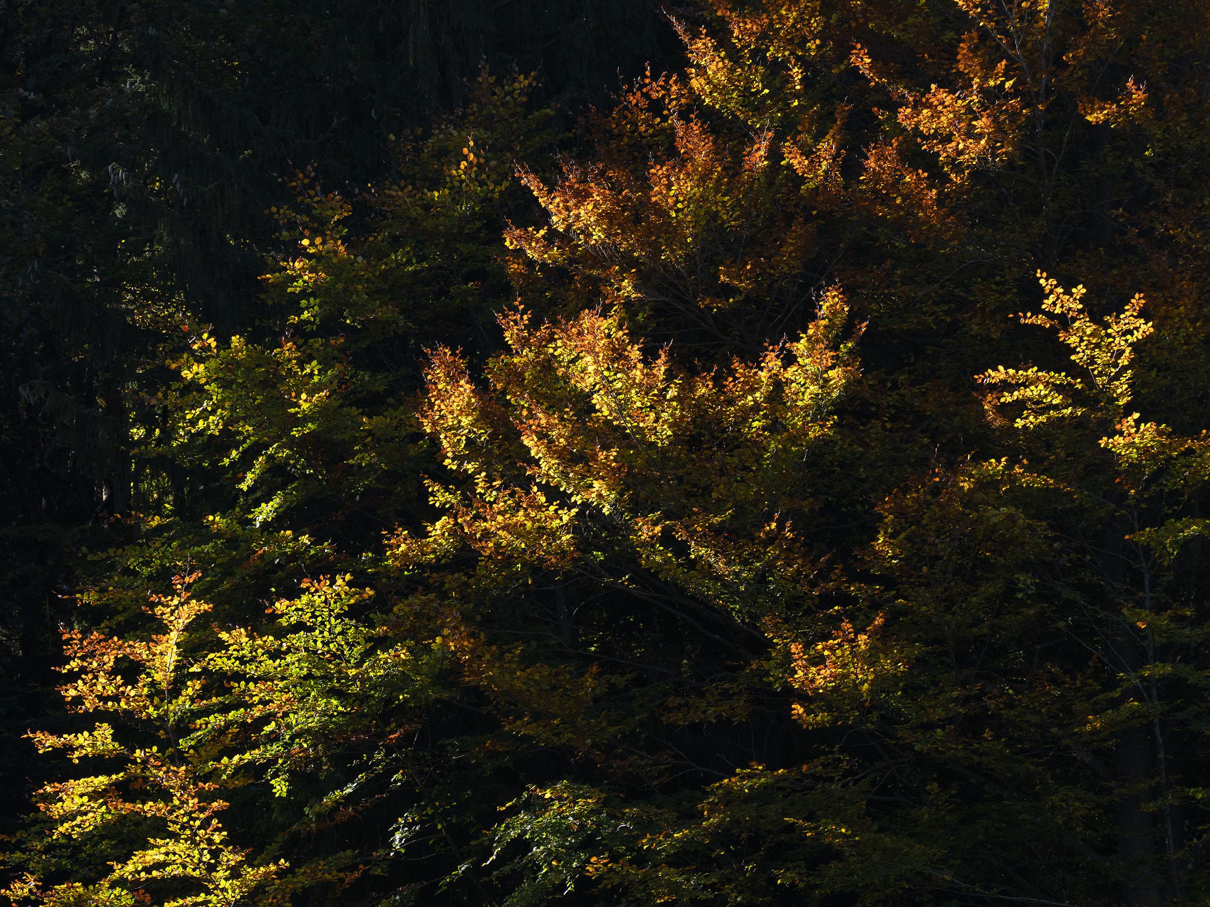 Herbstfarben im Zürcher Oberland (7/7)