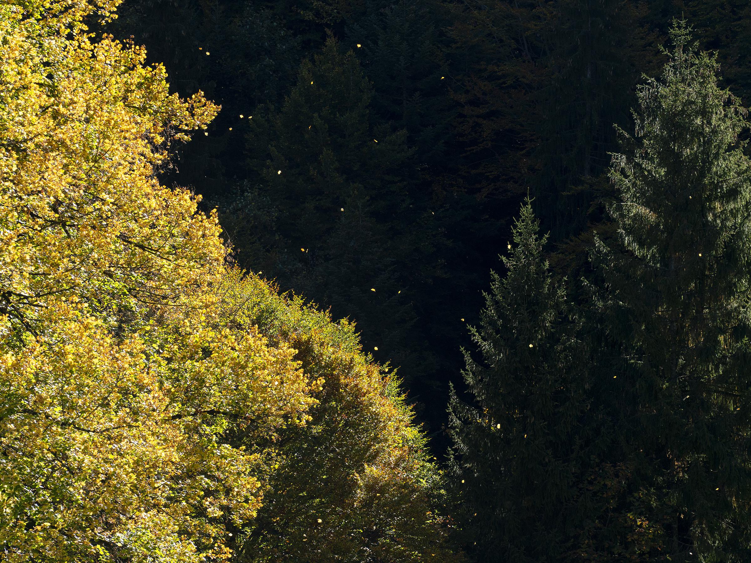 Herbstfarben im Zürcher Oberland (6/7)