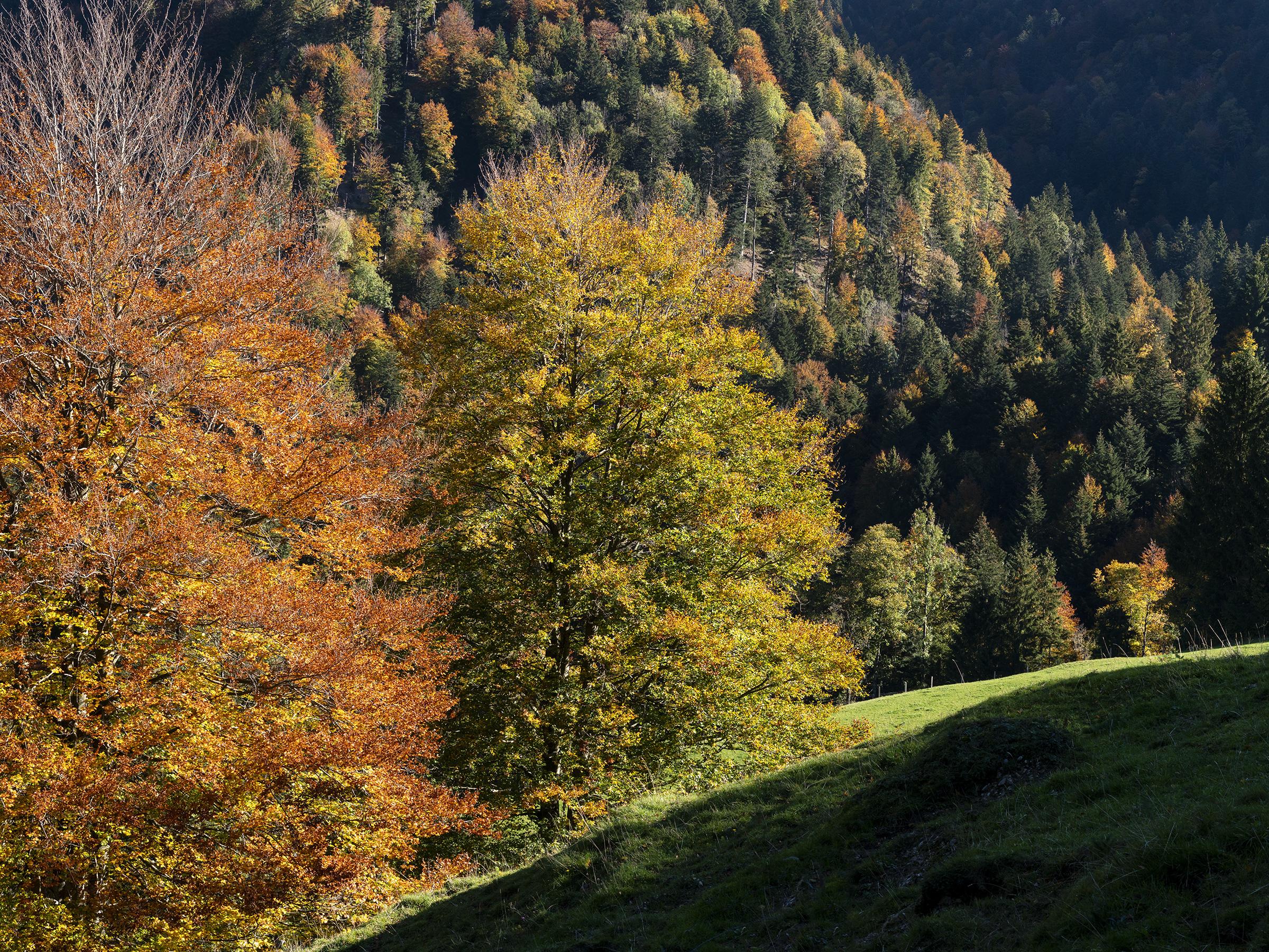 Herbstfarben im Zürcher Oberland (4/7)
