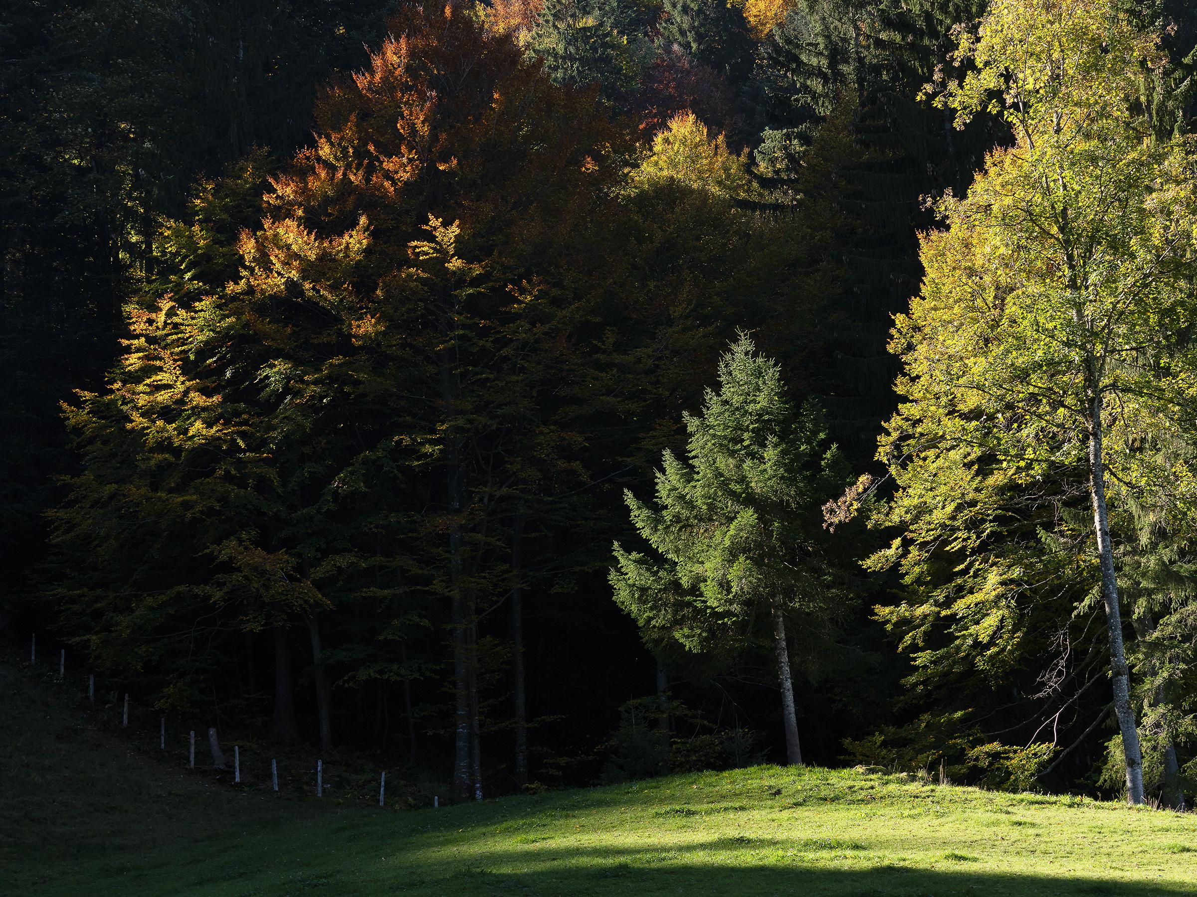 Herbstfarben im Zürcher Oberland (3/7)