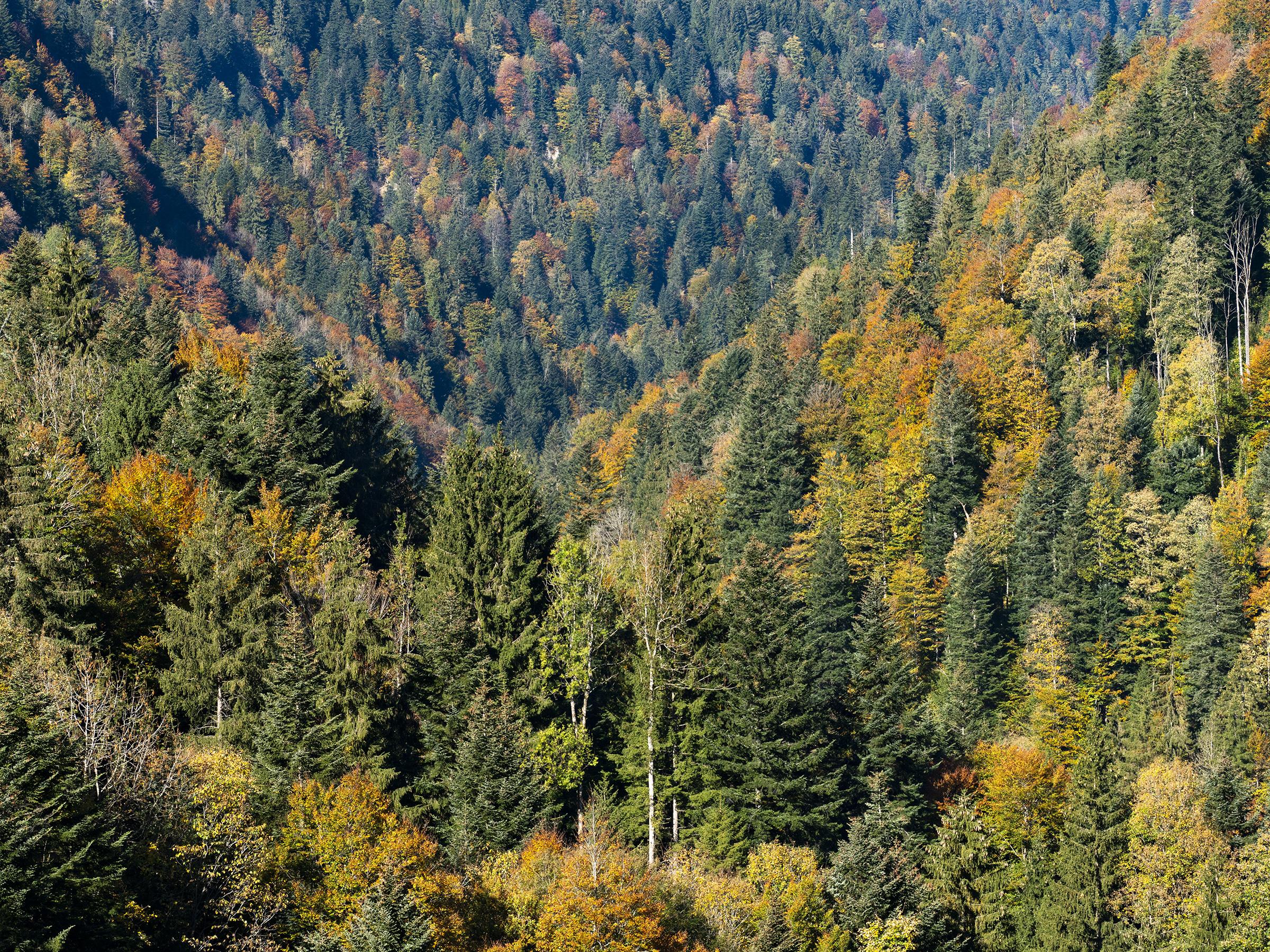 Herbstfarben im Zürcher Oberland (2/7)