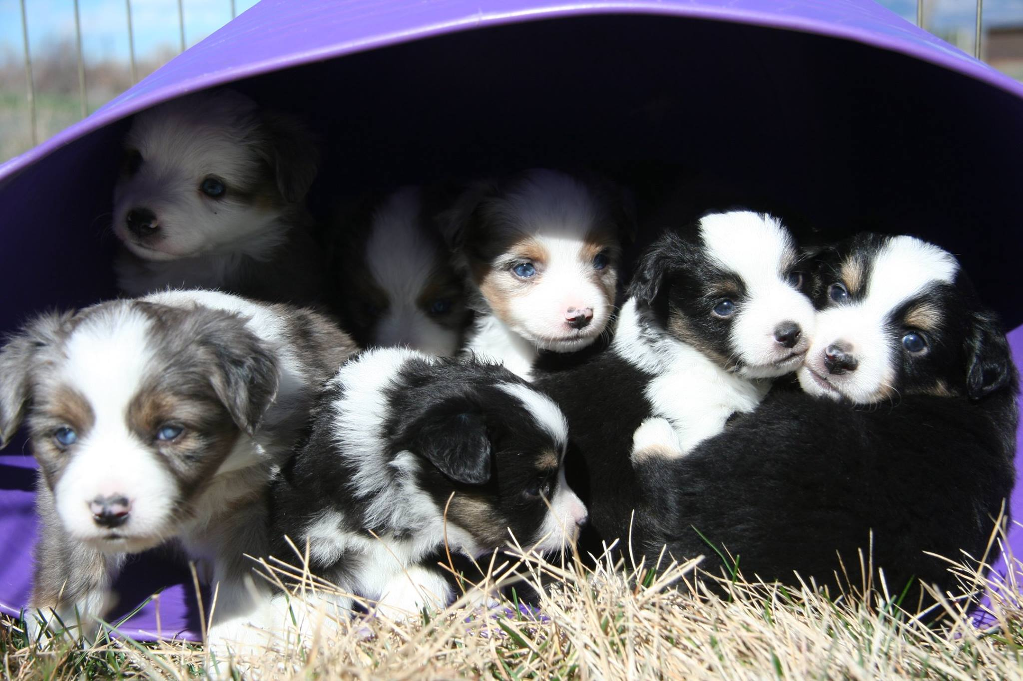 Puppies Do Love to Be in Buckets!