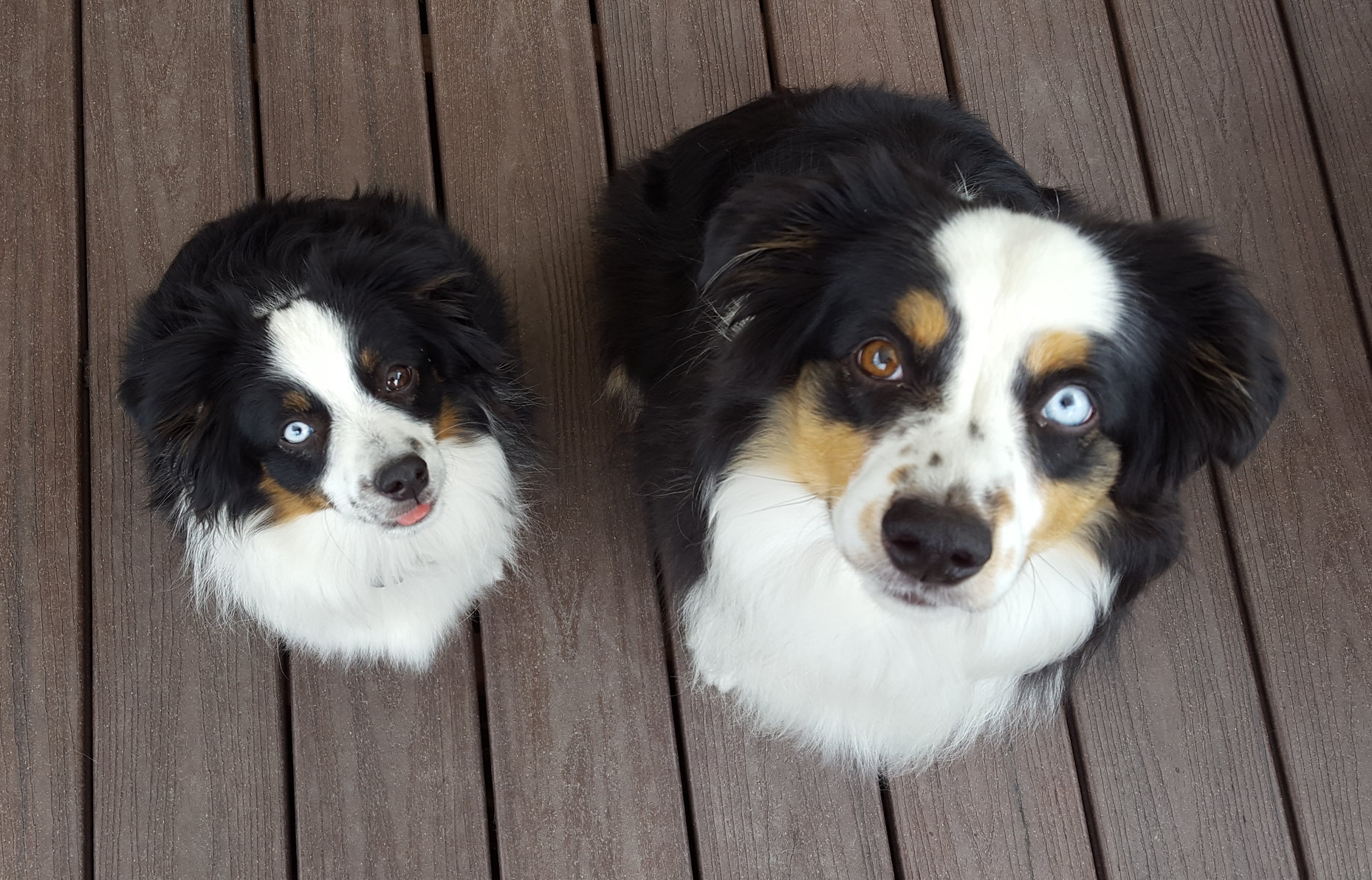 Almost Twins: Maeve of Fort Collins, CO and Panda of Phoenix, AZ