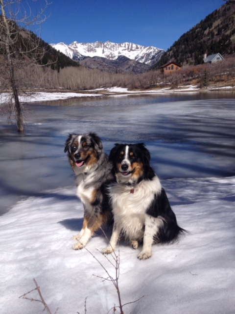 Poncho and Hefe love the winter and their mountains.