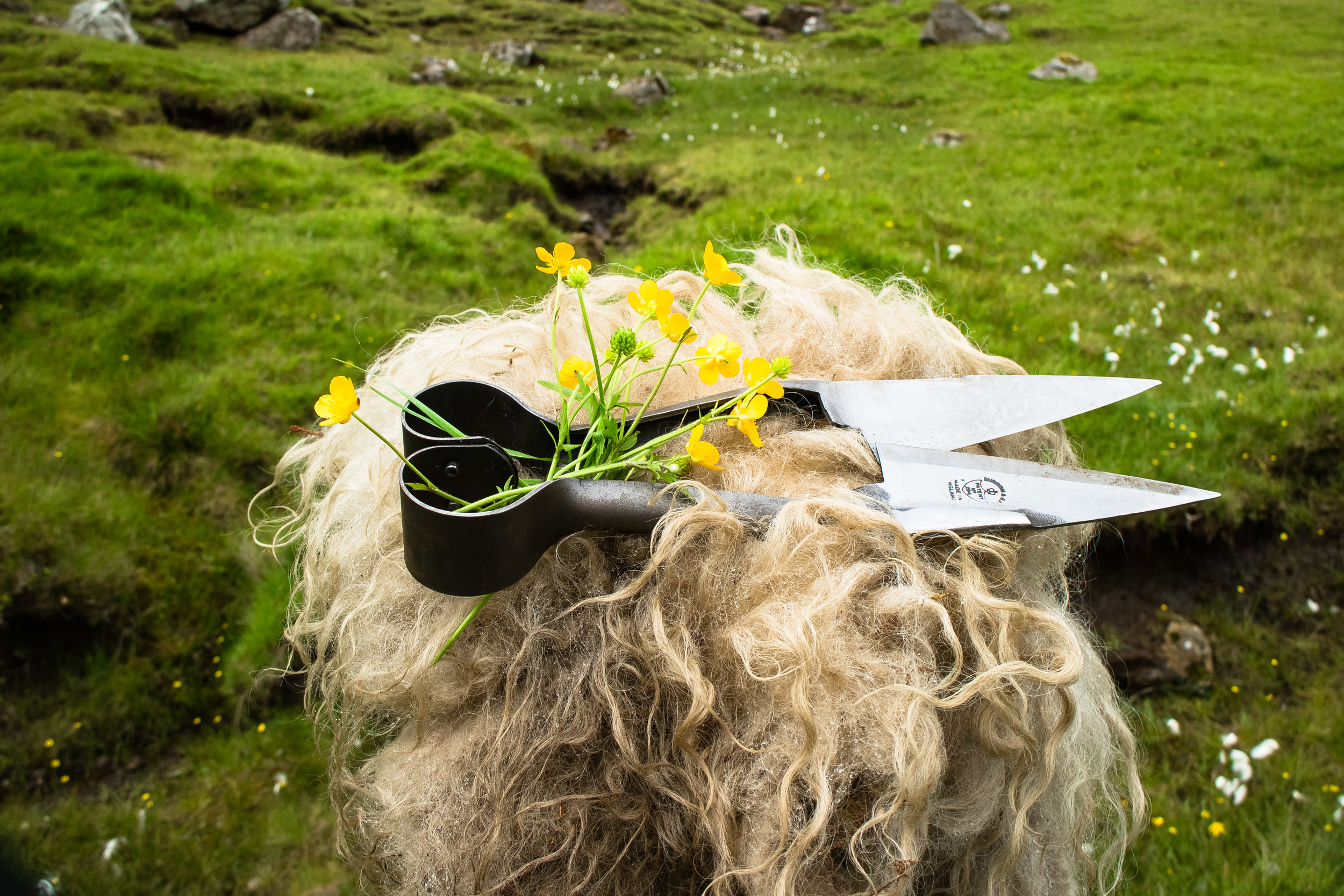 Blade Shears © My Faroe Islands, Anja Mazuhn  (1 von 1).jpg