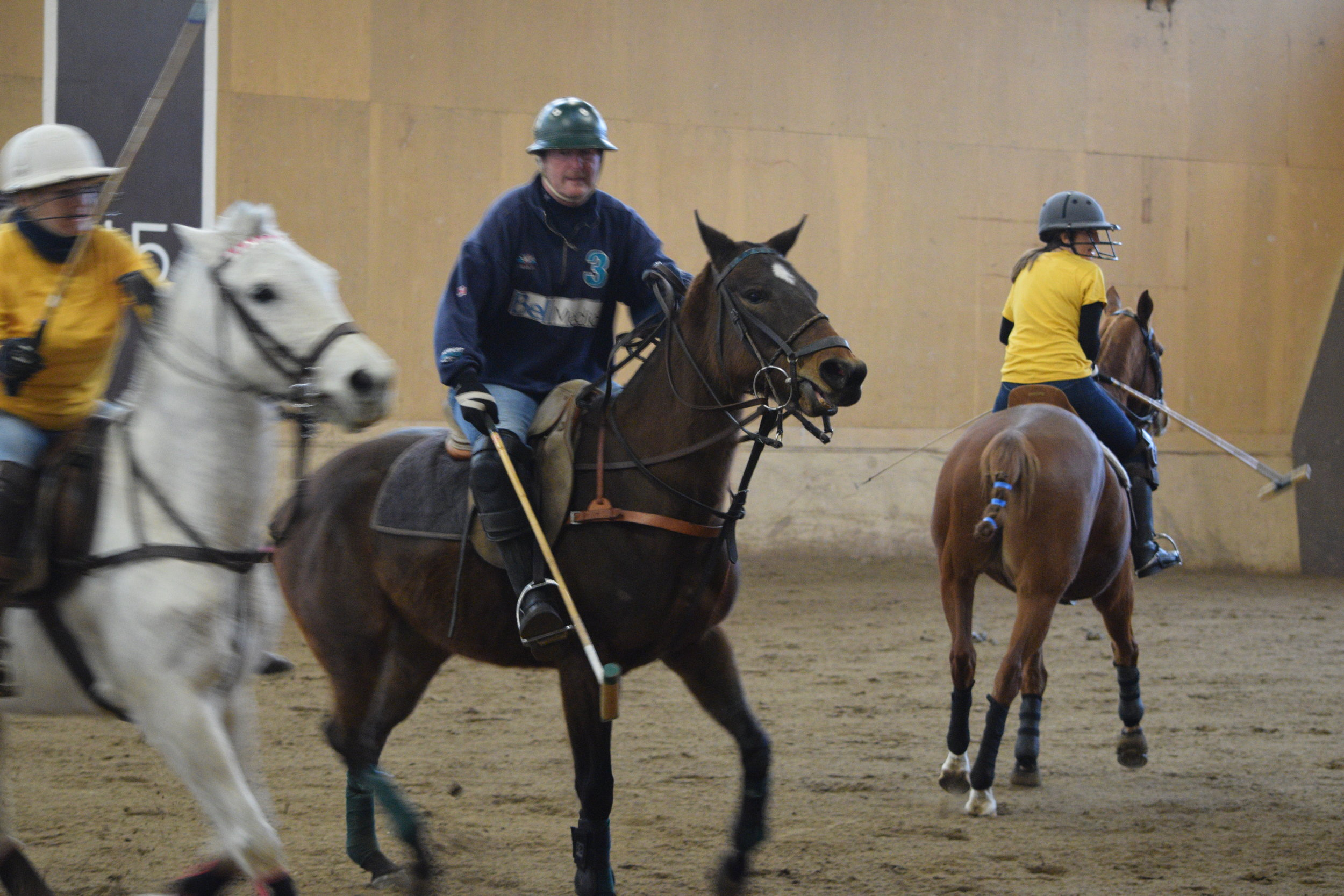 Photo of Polo Pony in Training, Paris